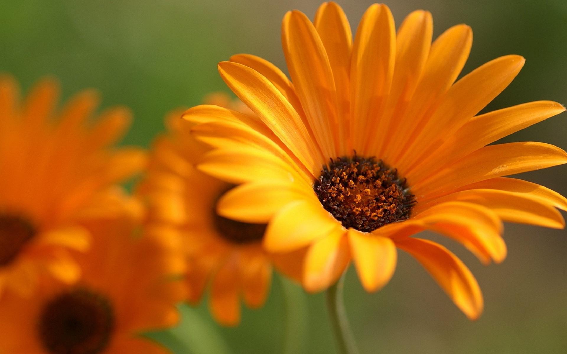 Islamic 3d Wallpapers Screensavers Flower Orange Petals Macro Hd Desktop Wallpapers 4k Hd