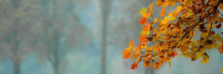 Live Wallpaper Fall Leaves Leaves Autumn Wallpaper Hd Desktop Wallpapers 4k Hd