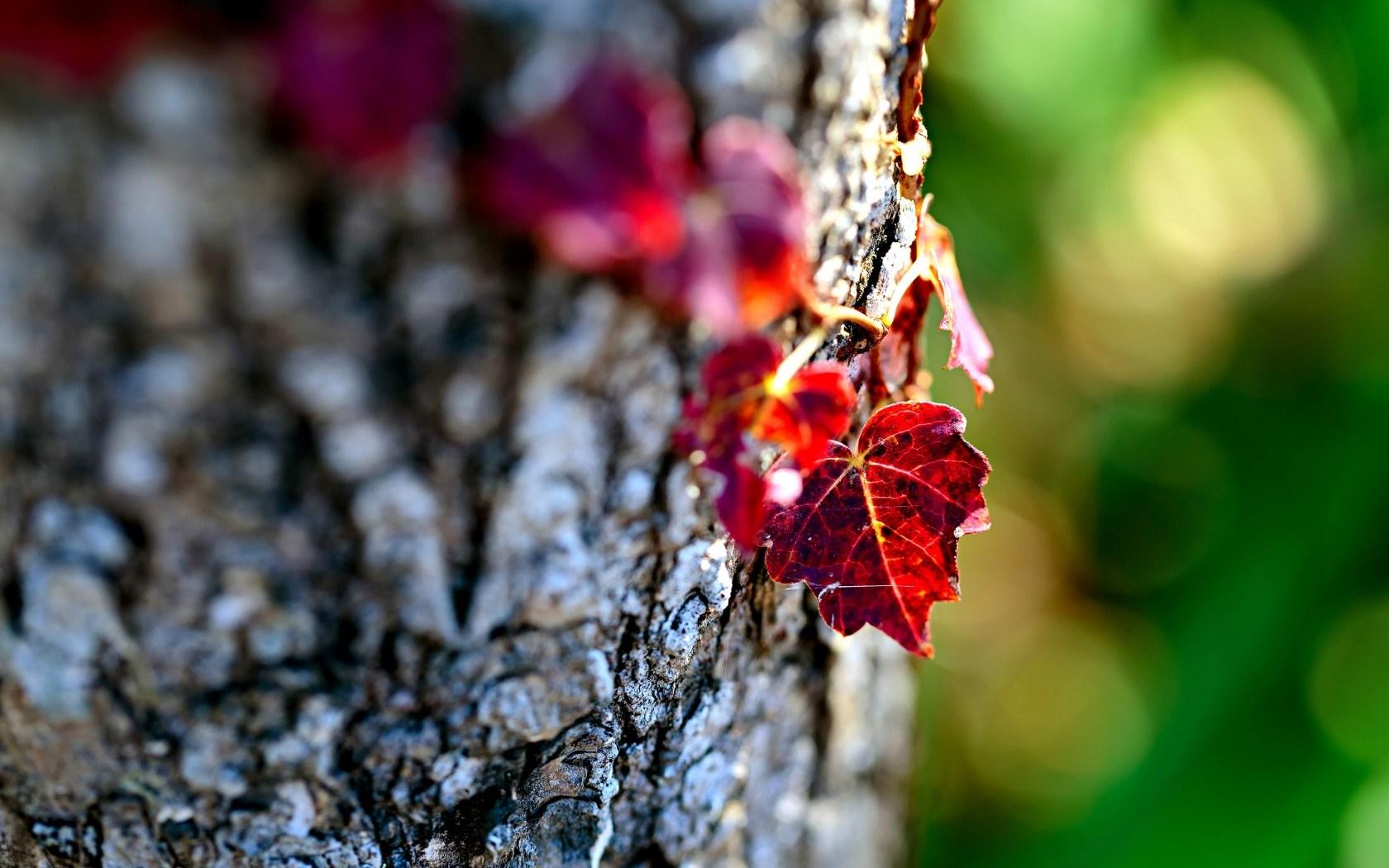 Fall Season Computer Wallpaper Leaves Picture Photography Hd Desktop Wallpapers 4k Hd