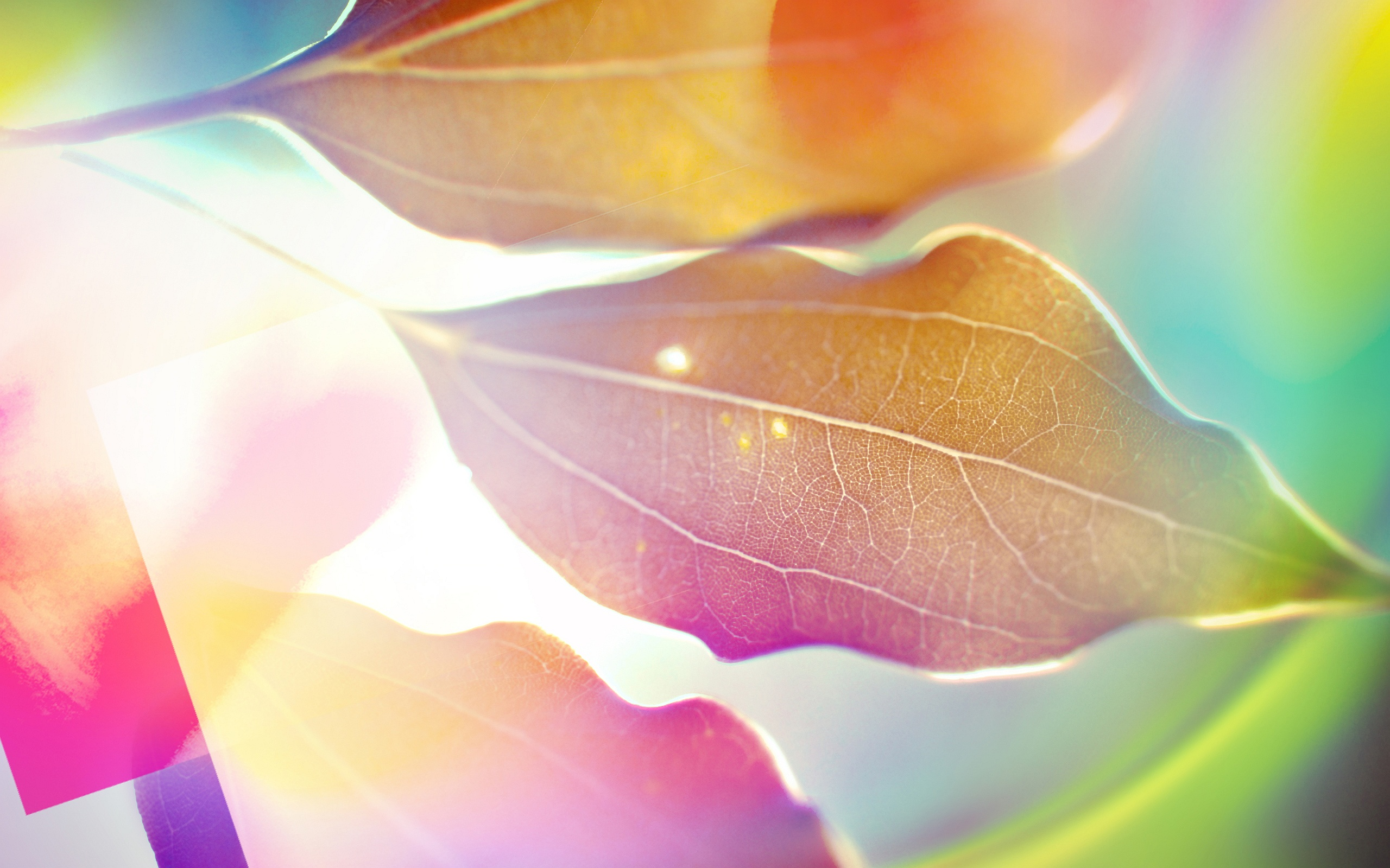 Rama 3d Name Wallpapers Leaves Picture Sunlight Hd Desktop Wallpapers 4k Hd
