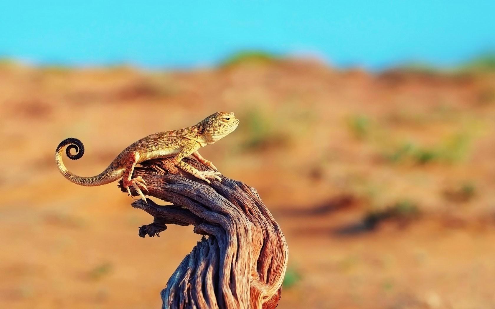 Cool Nature Wallpapers 3d Lizard Wild Hd Desktop Wallpapers 4k Hd