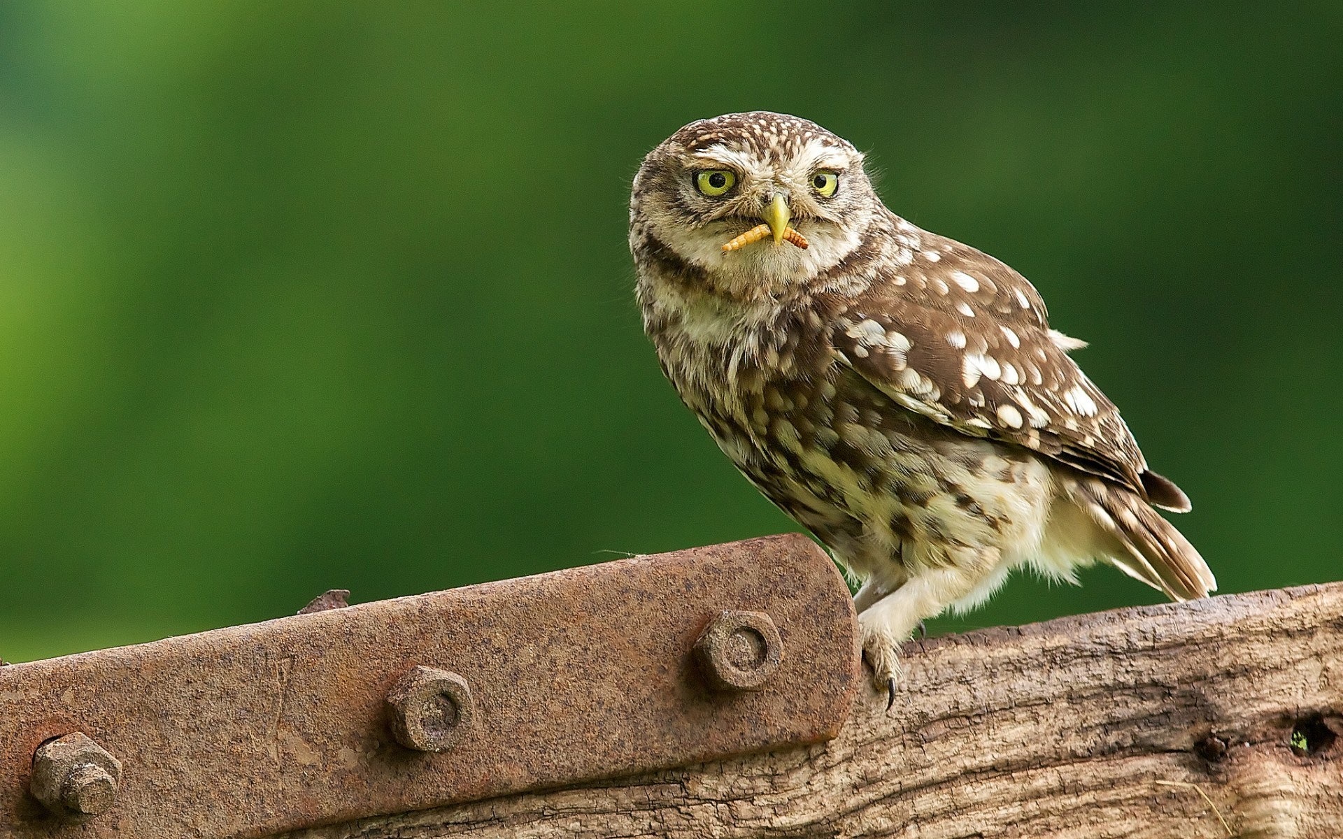 Angry Bird Space Wallpaper 3d Owl Hunting Hd Desktop Wallpapers 4k Hd
