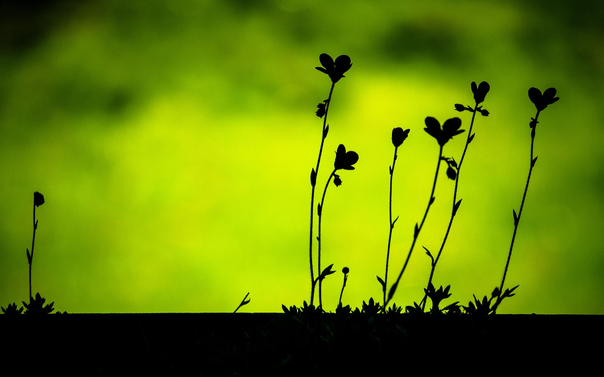 Cute Love Wallpaper Free Download Plant Silhouettes Hd Desktop Wallpapers 4k Hd