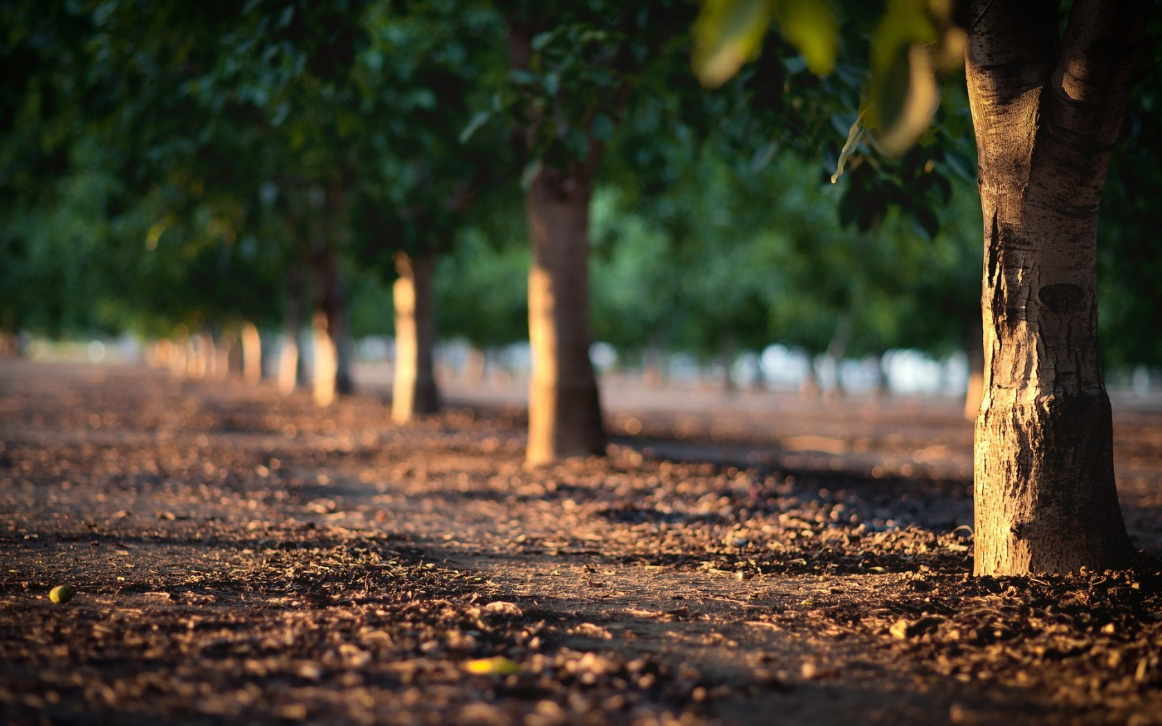 Depth Photo 3d Live Wallpaper Download Tree Pictures Photography Hd Desktop Wallpapers 4k Hd