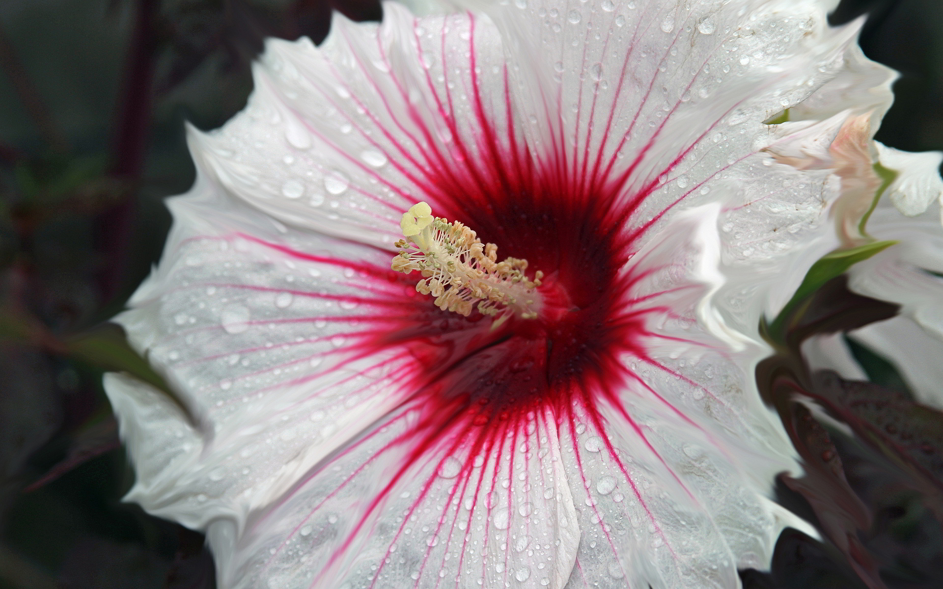 Cool Nature Wallpapers 3d White Hibiscus Hd Desktop Wallpapers 4k Hd