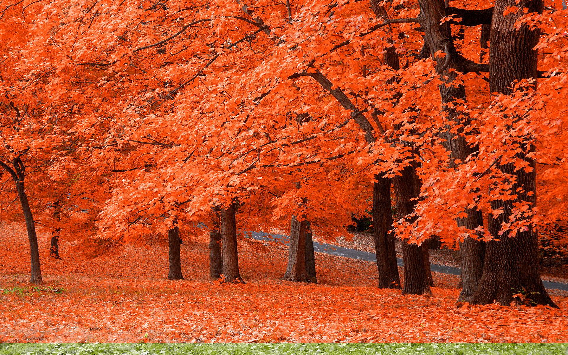 Autumn Leaves 3d Live Wallpaper Autumn Widescreen Wallpaper Hd Desktop Wallpapers 4k Hd