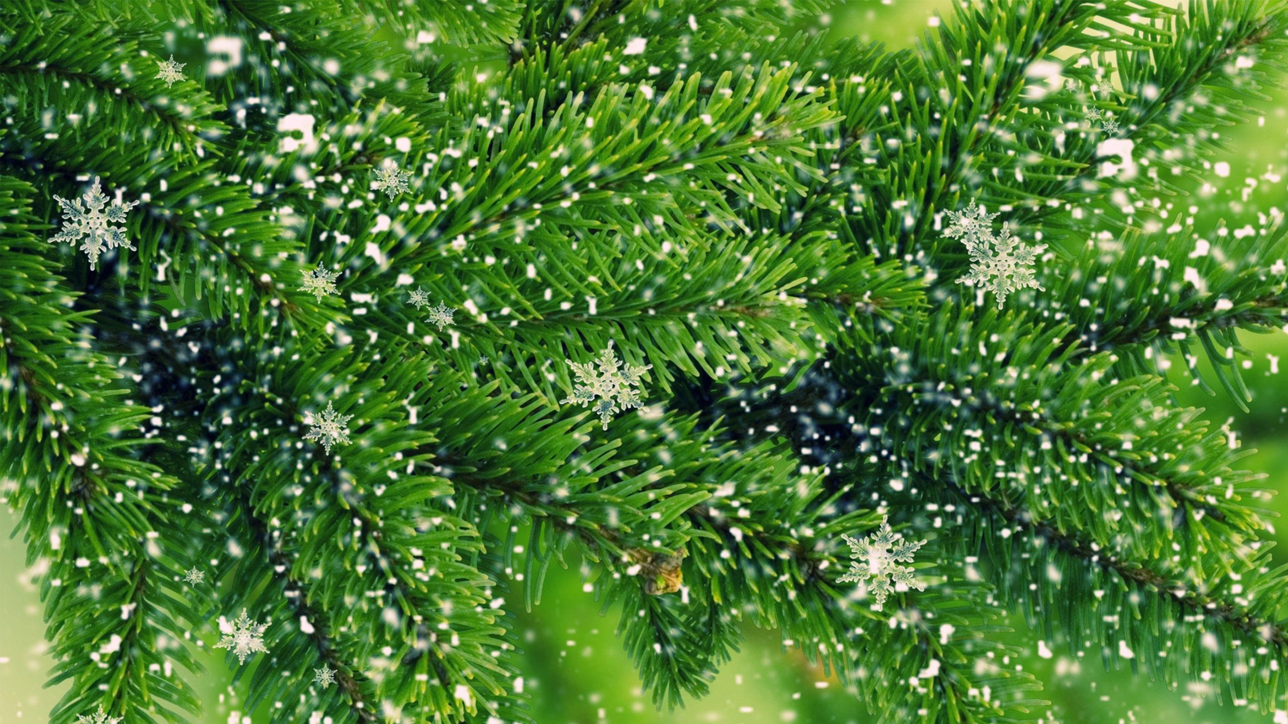 Cool 3d Wallpapers Nature Beautiful Pine Hd Desktop Wallpapers 4k Hd