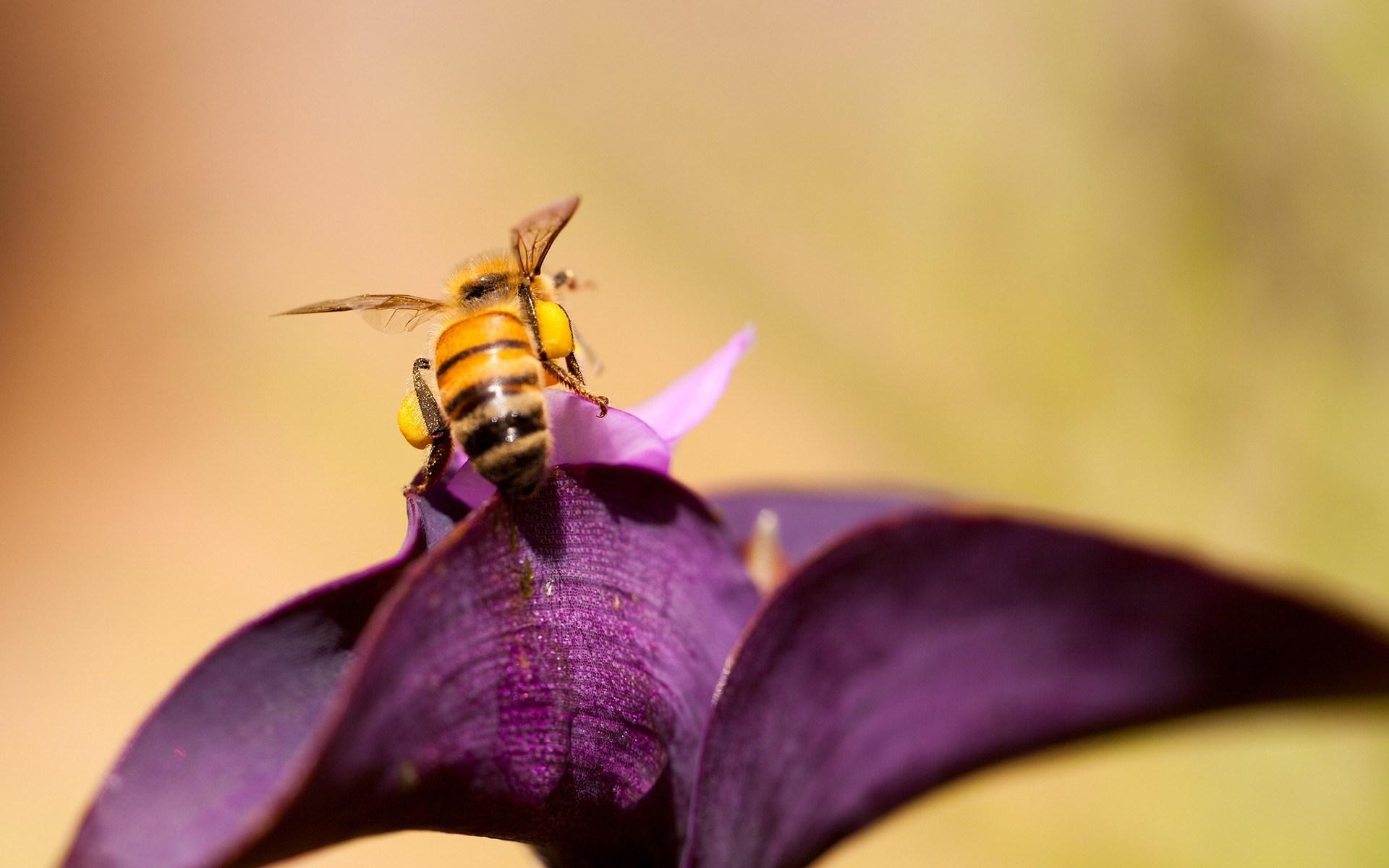 Butterfly 3d Live Wallpaper Free Download Bee Flower Hd Desktop Wallpapers 4k Hd