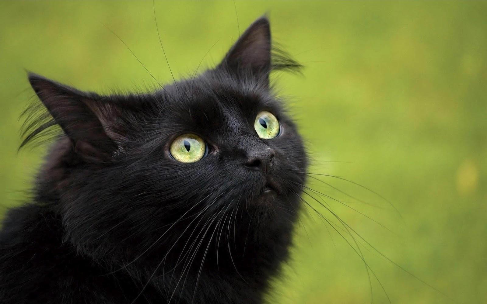 Snake 3d Live Wallpaper Black Cat Scary Hd Desktop Wallpapers 4k Hd