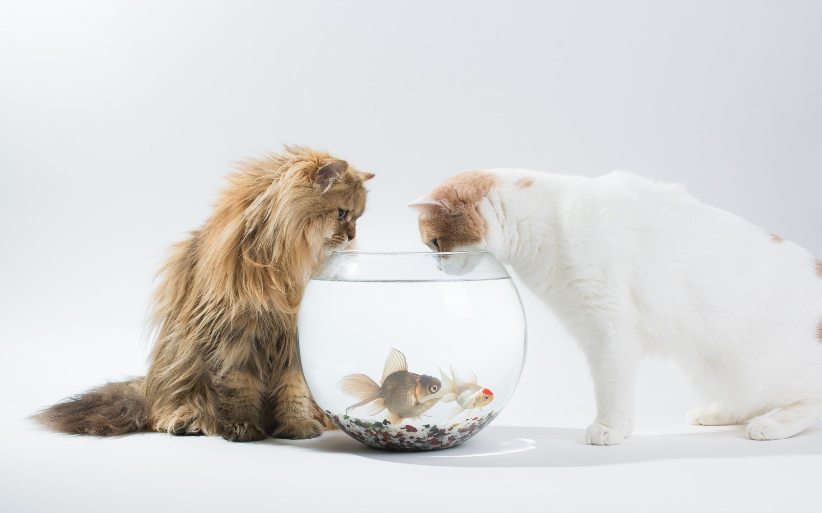 3d Wallpaper Live Fish Cats Fish Hd Desktop Wallpapers 4k Hd