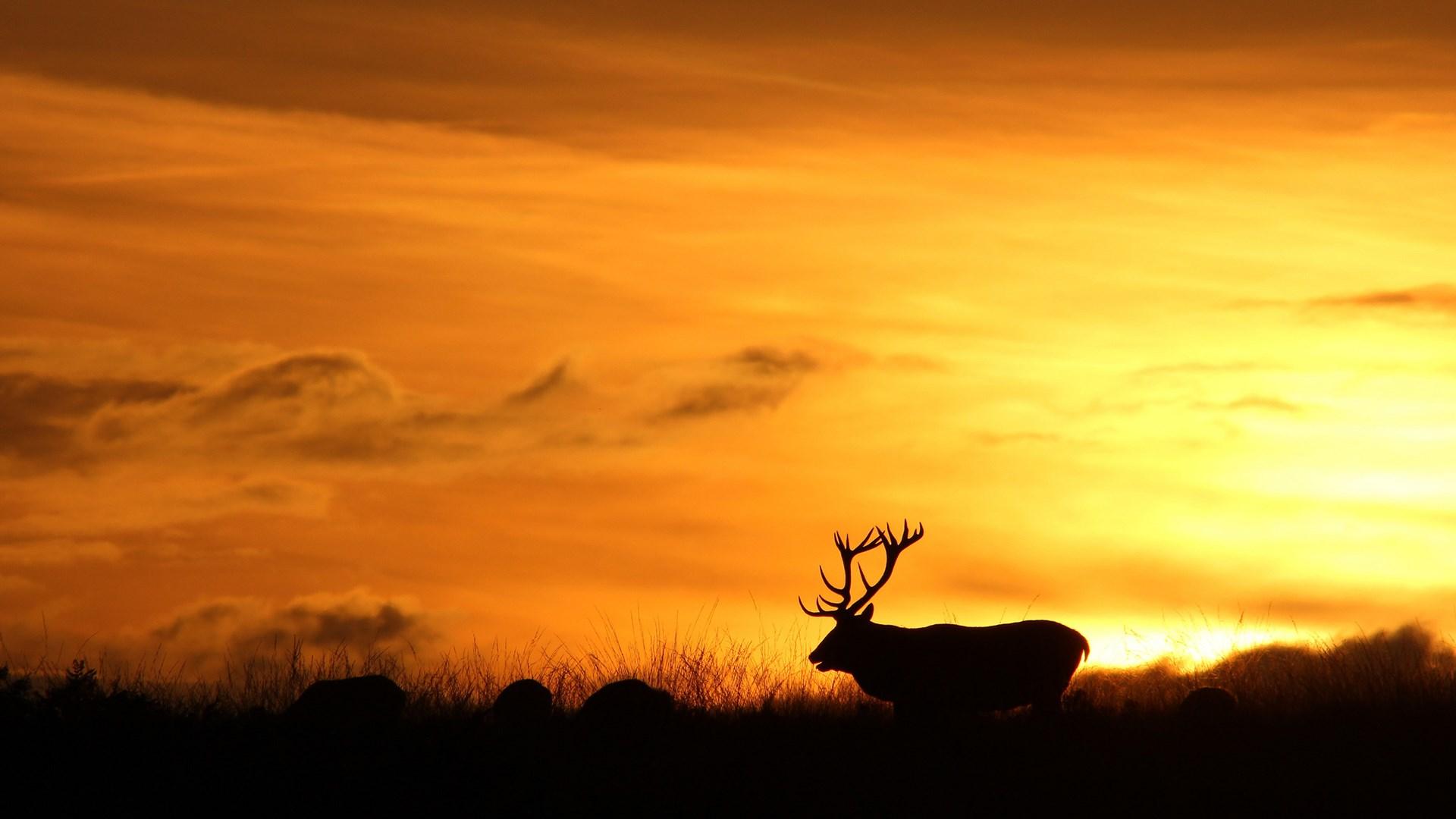 3d Deer Nature Live Wallpaper Deer Wallpaper Hd Desktop Wallpapers 4k Hd