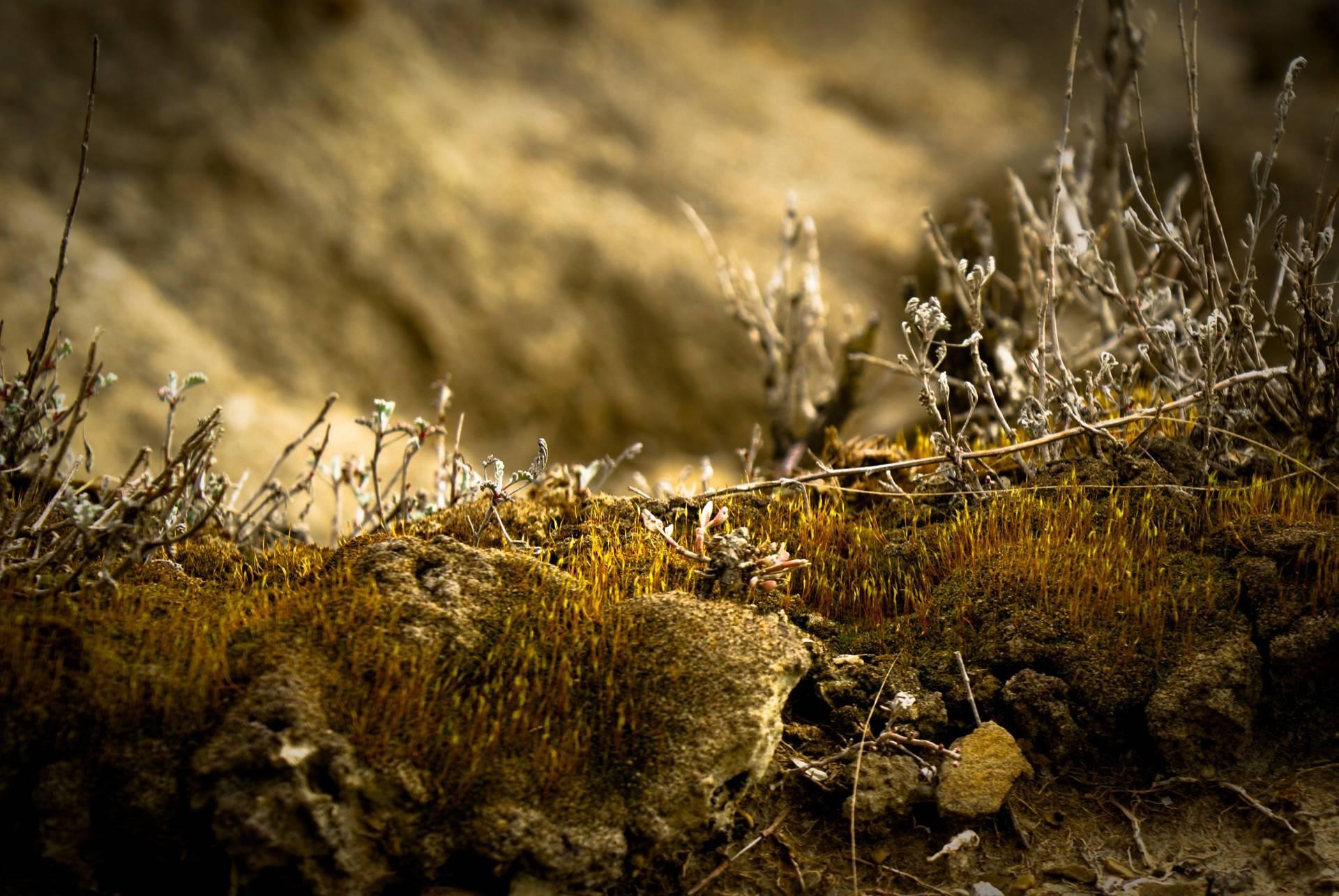 Depth Photo 3d Live Wallpaper Download Depth Of Field Nature Hd Desktop Wallpapers 4k Hd