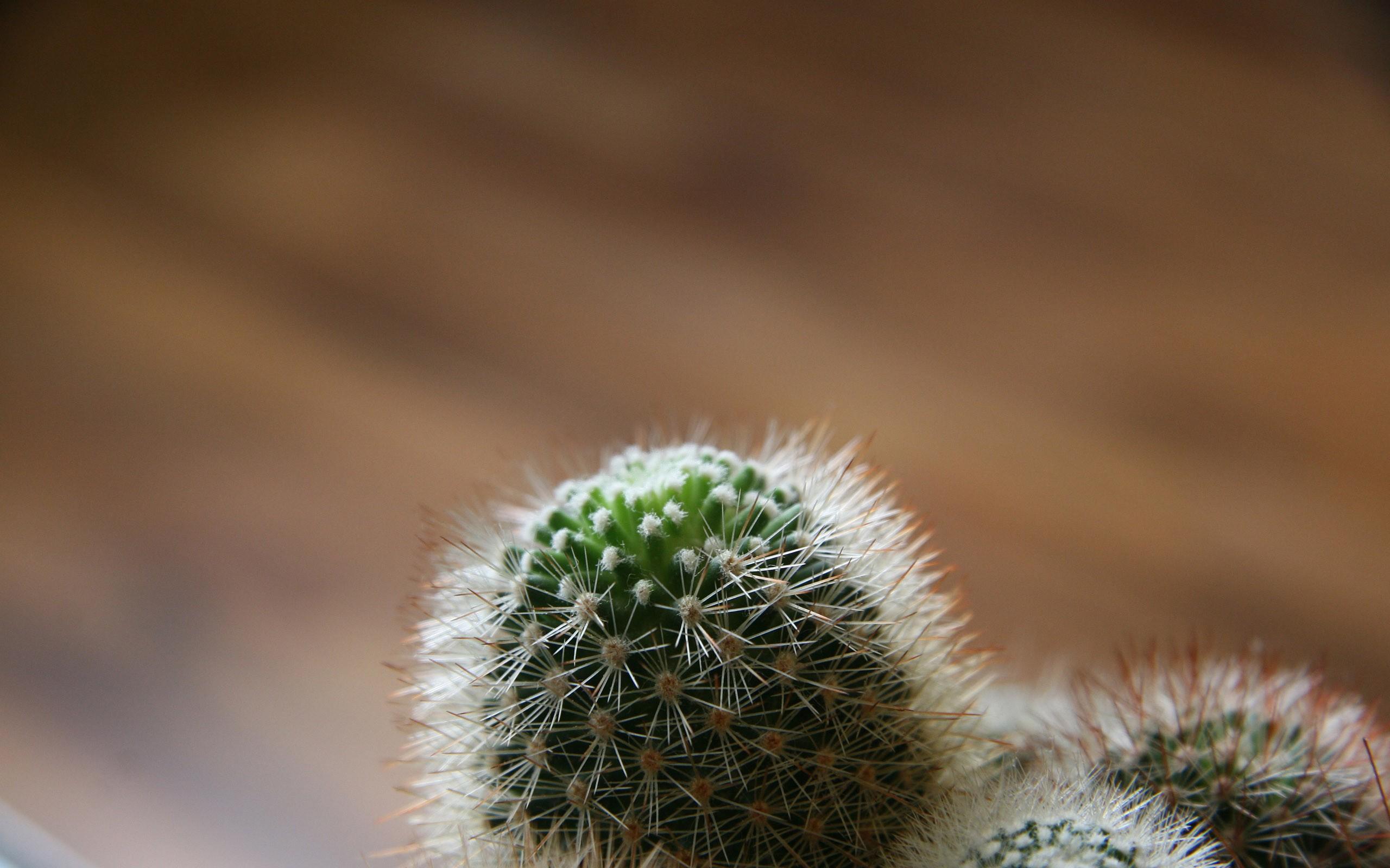 Cute Duck Hd Wallpaper Desert Cactus Images Hd Desktop Wallpapers 4k Hd
