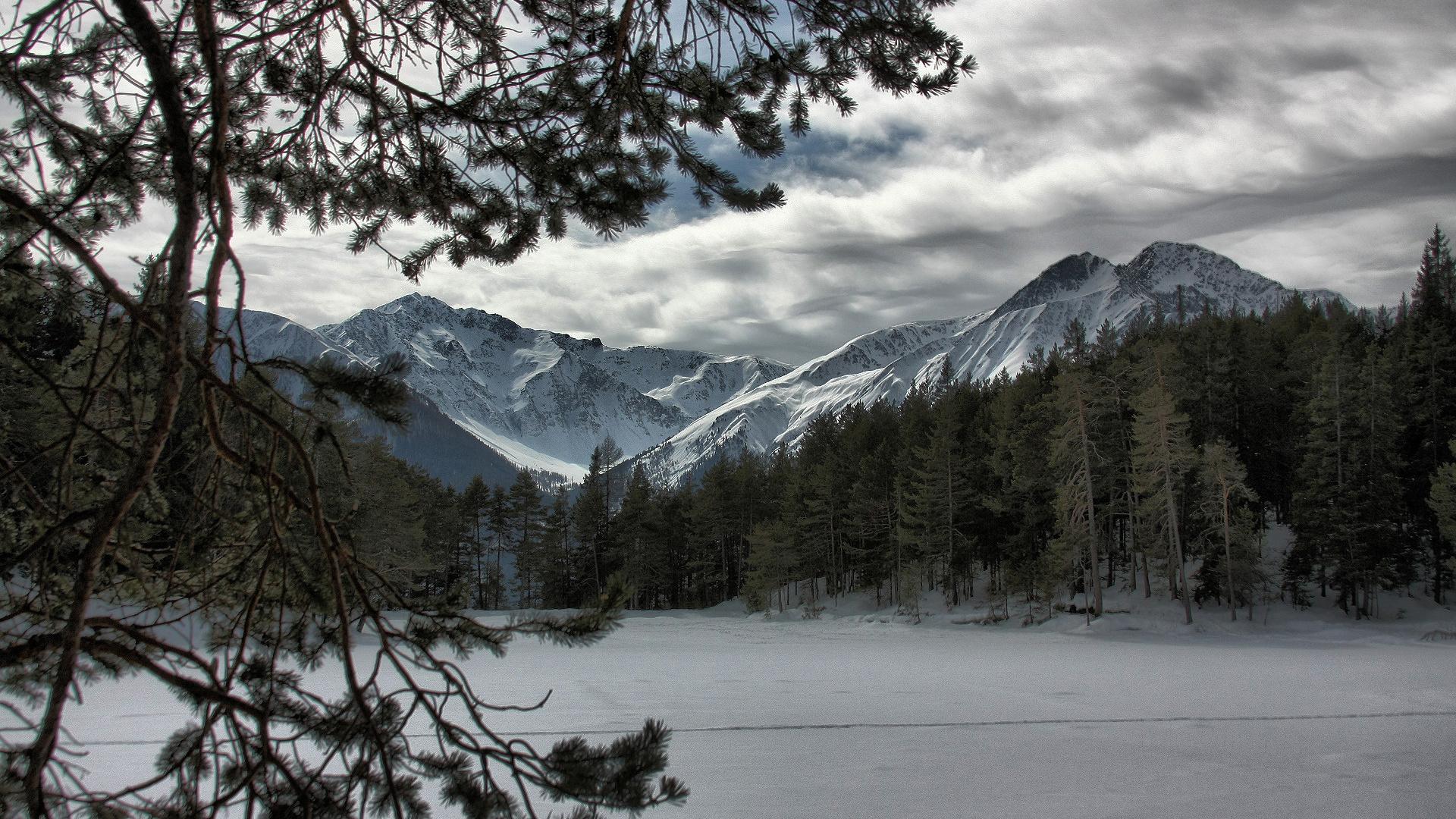 3d Ice Wolf Wallpaper Frozen Forest Backgrounds Hd Desktop Wallpapers 4k Hd