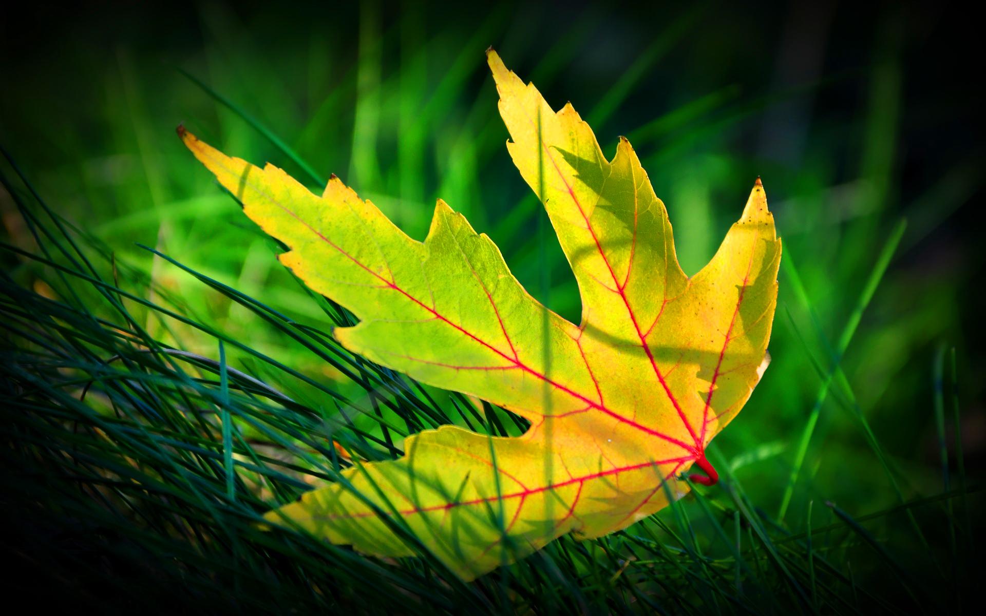 Fall Leaves Desktop Wallpaper Free Green Leaf Beautiful Hd Desktop Wallpapers 4k Hd