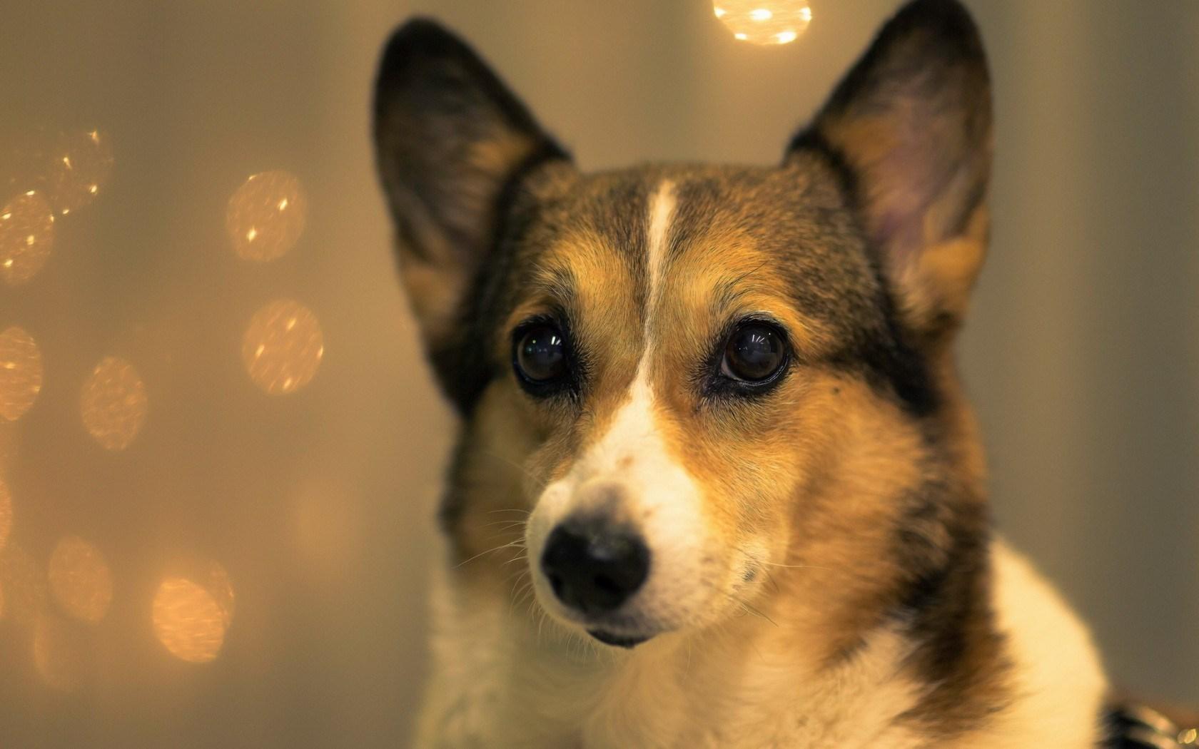 Live Wallpaper Fall Leaves Dog Licking Fawn Hd Desktop Wallpapers 4k Hd