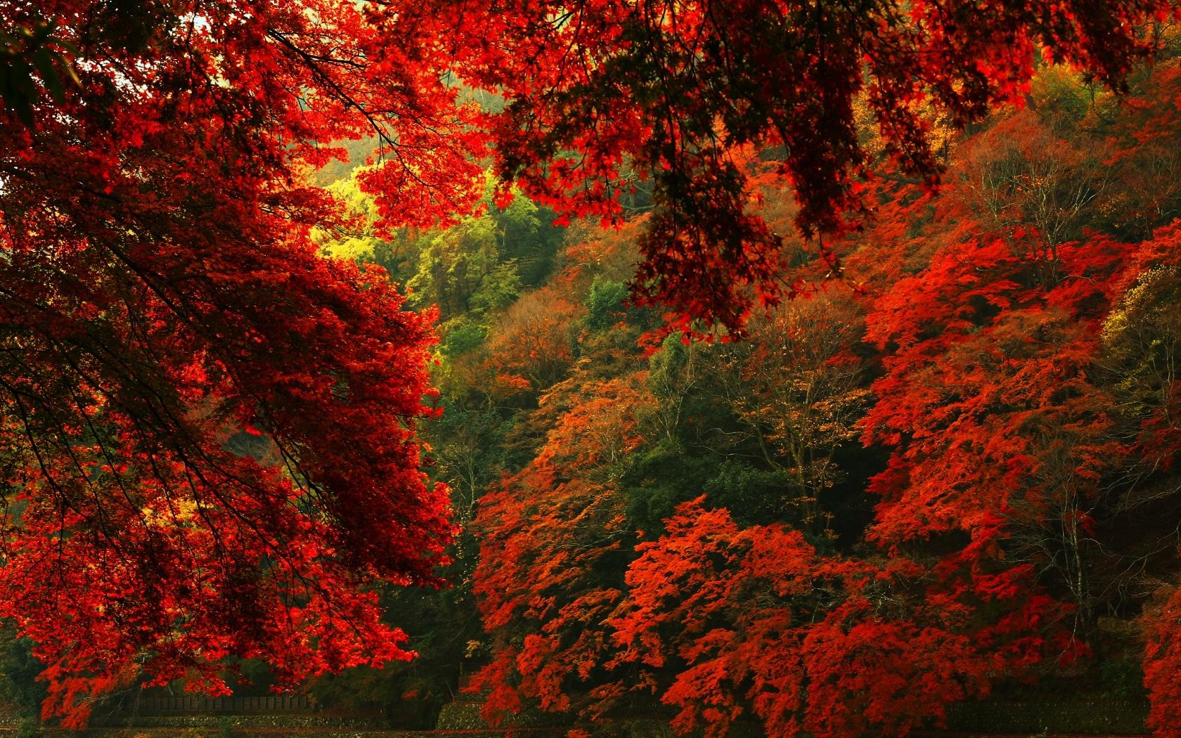 Autumn Leaves 3d Live Wallpaper Hd Wallpapers Forest Red2 Hd Desktop Wallpapers 4k Hd