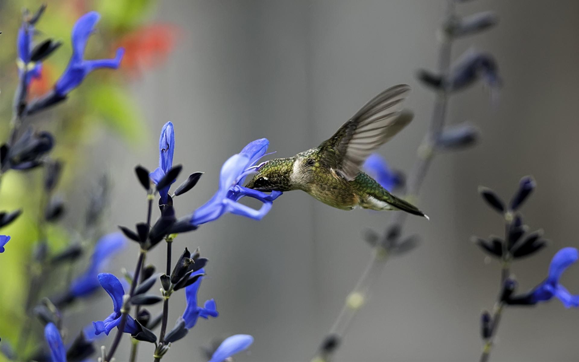 Cute 3d Flower Wallpaper Hummingbird Desktop Backgrounds Hd Desktop Wallpapers