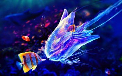 jellyfish live wallpaper - HD Desktop Wallpapers | 4k HD