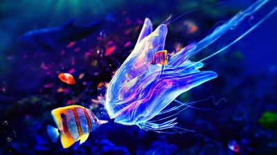 jellyfish live wallpaper - HD Desktop Wallpapers | 4k HD