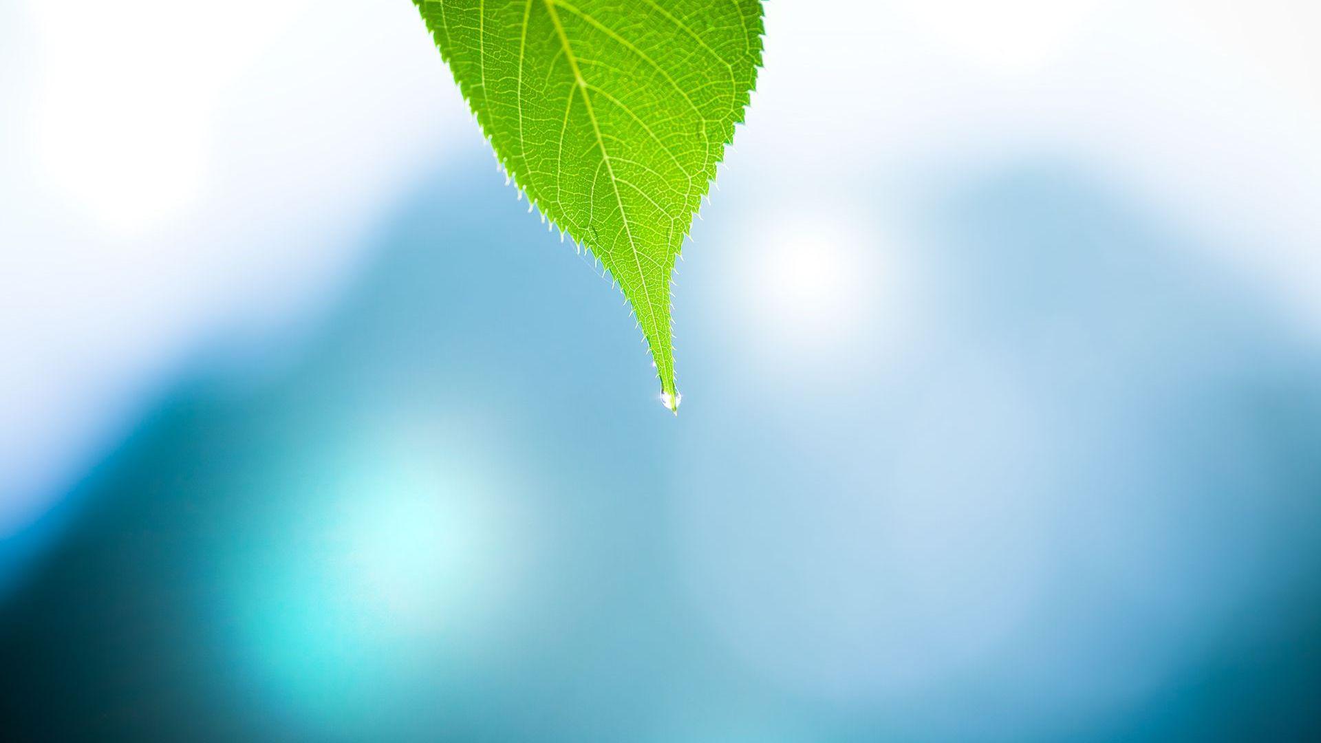 Autumn Leaves 3d Live Wallpaper Leaf Wallpaper Dew Drops Hd Desktop Wallpapers 4k Hd
