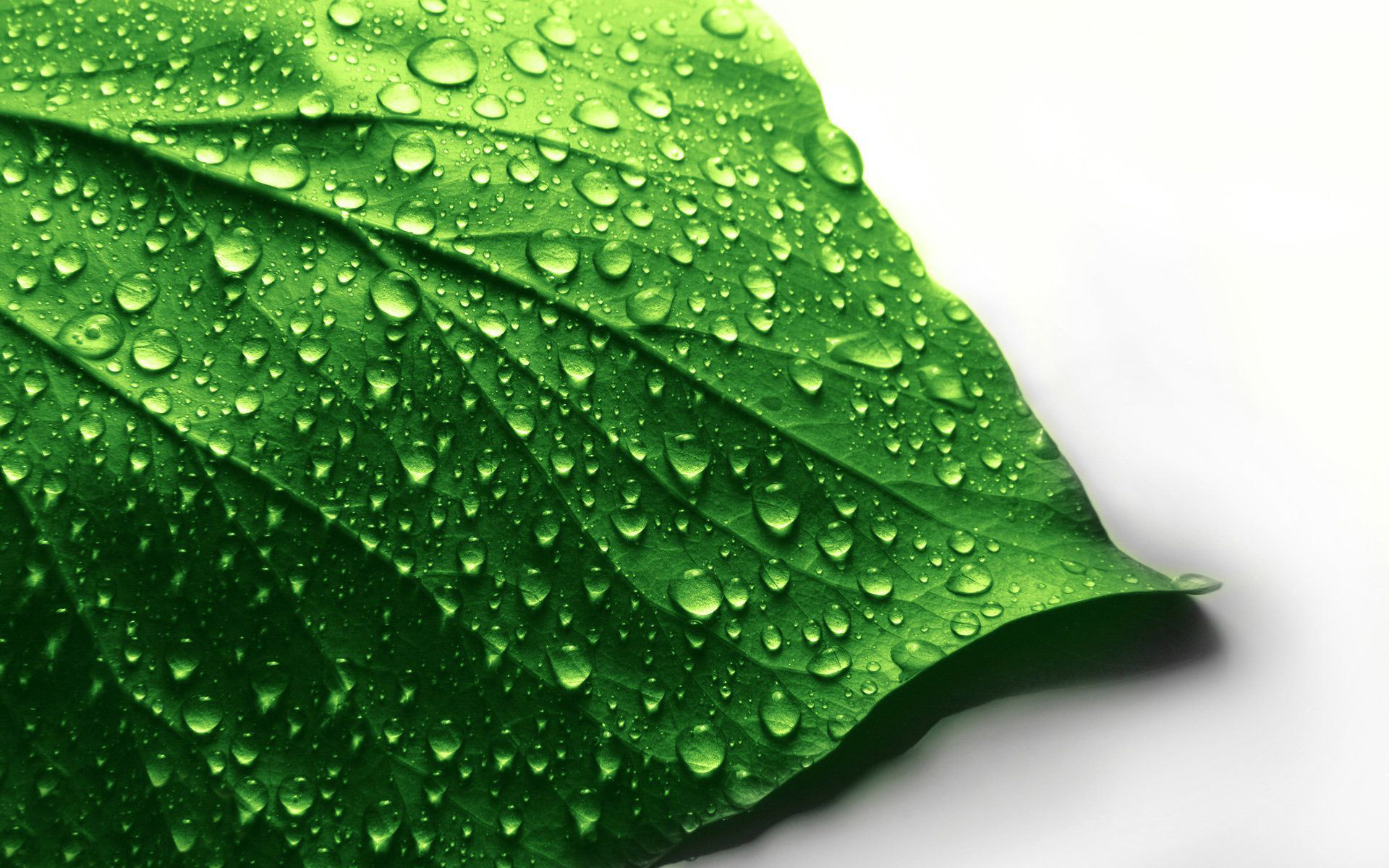 Autumn Leaves 3d Live Wallpaper Leaf Wallpaper Wet Hd Desktop Wallpapers 4k Hd