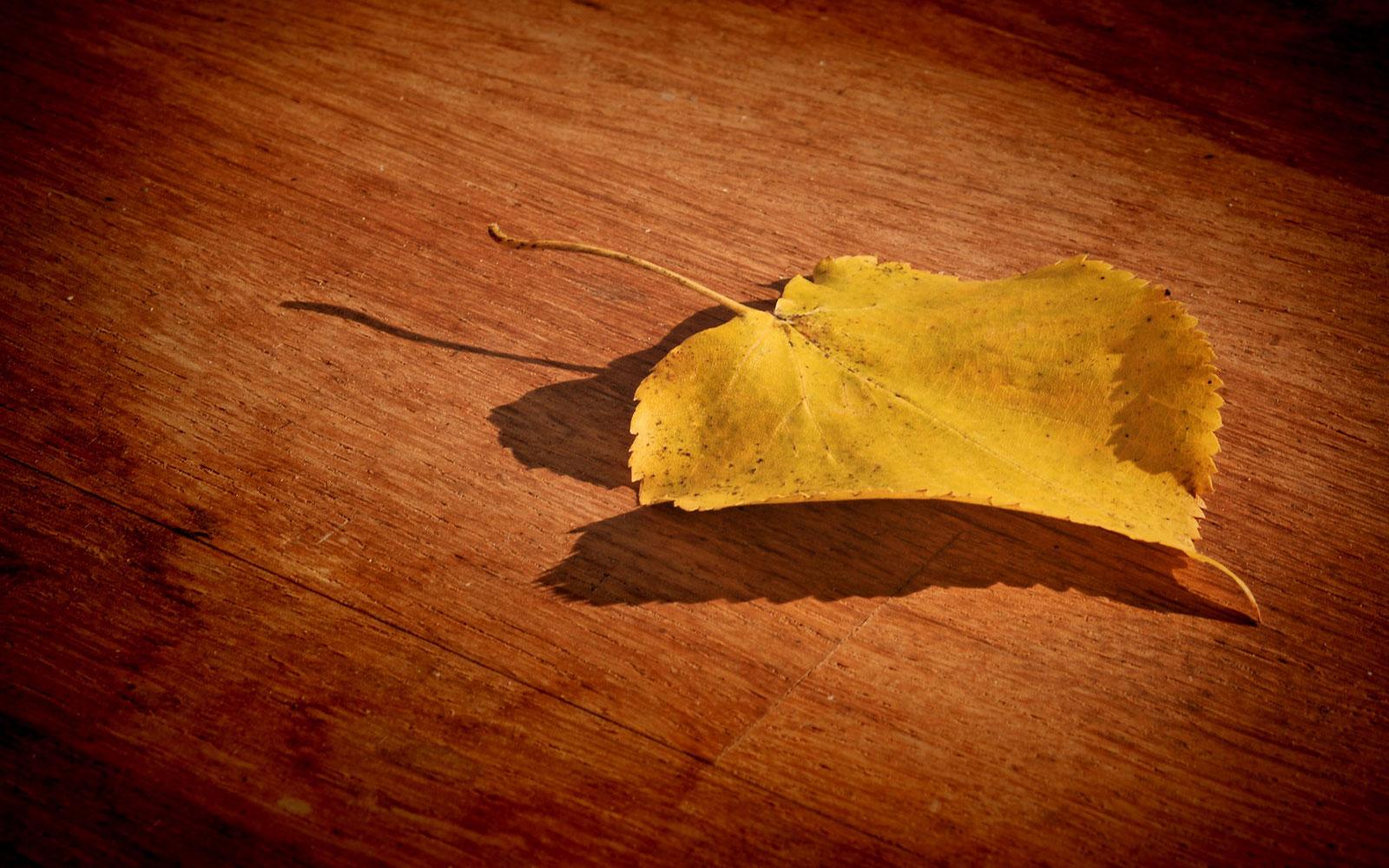 Fall Leaves Desktop Wallpaper Backgrouns Leaf Wallpaper Hd Desktop Wallpapers 4k Hd
