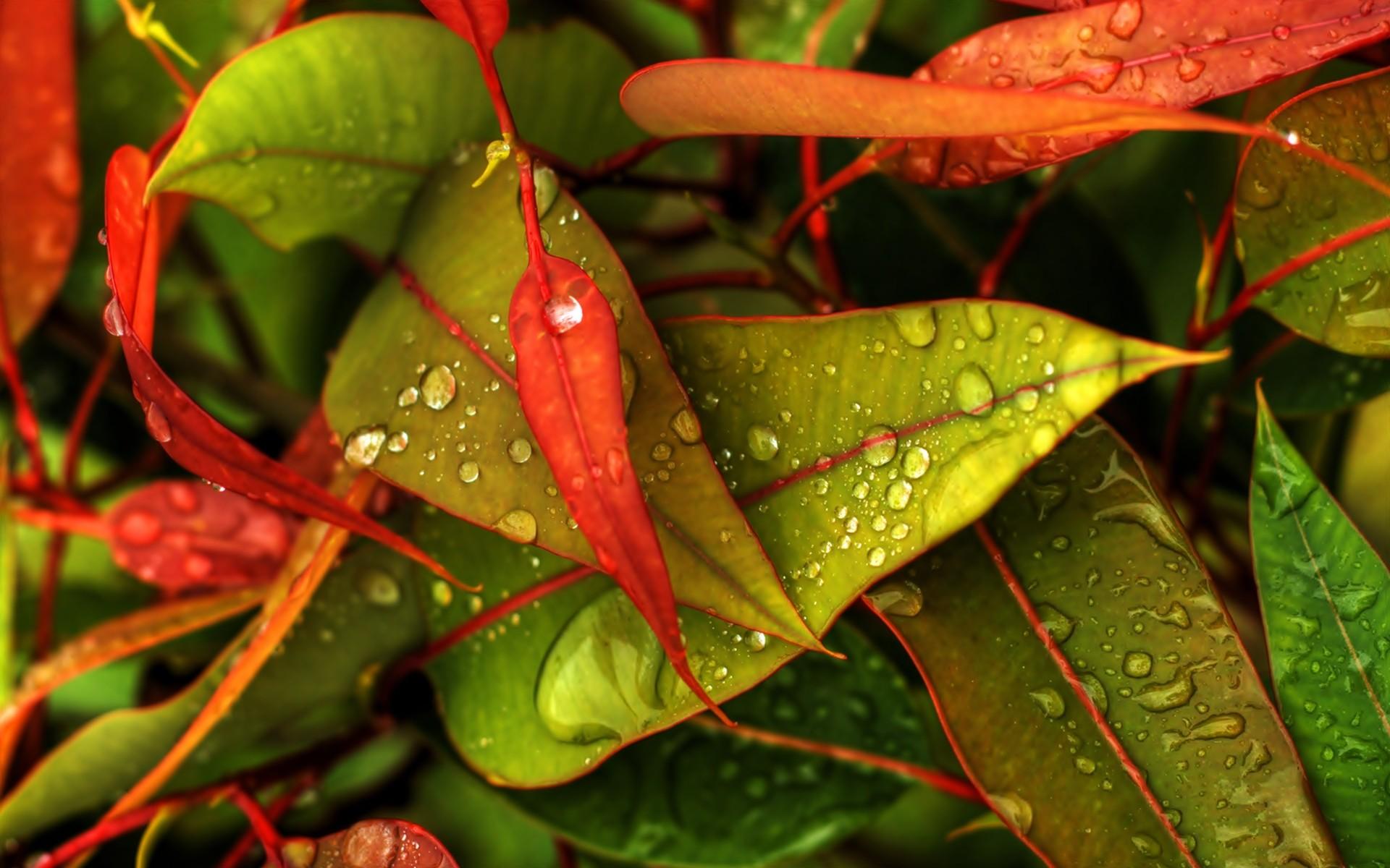 Nechar Wallpaper 3d Leaves Colorful Hd Desktop Wallpapers 4k Hd