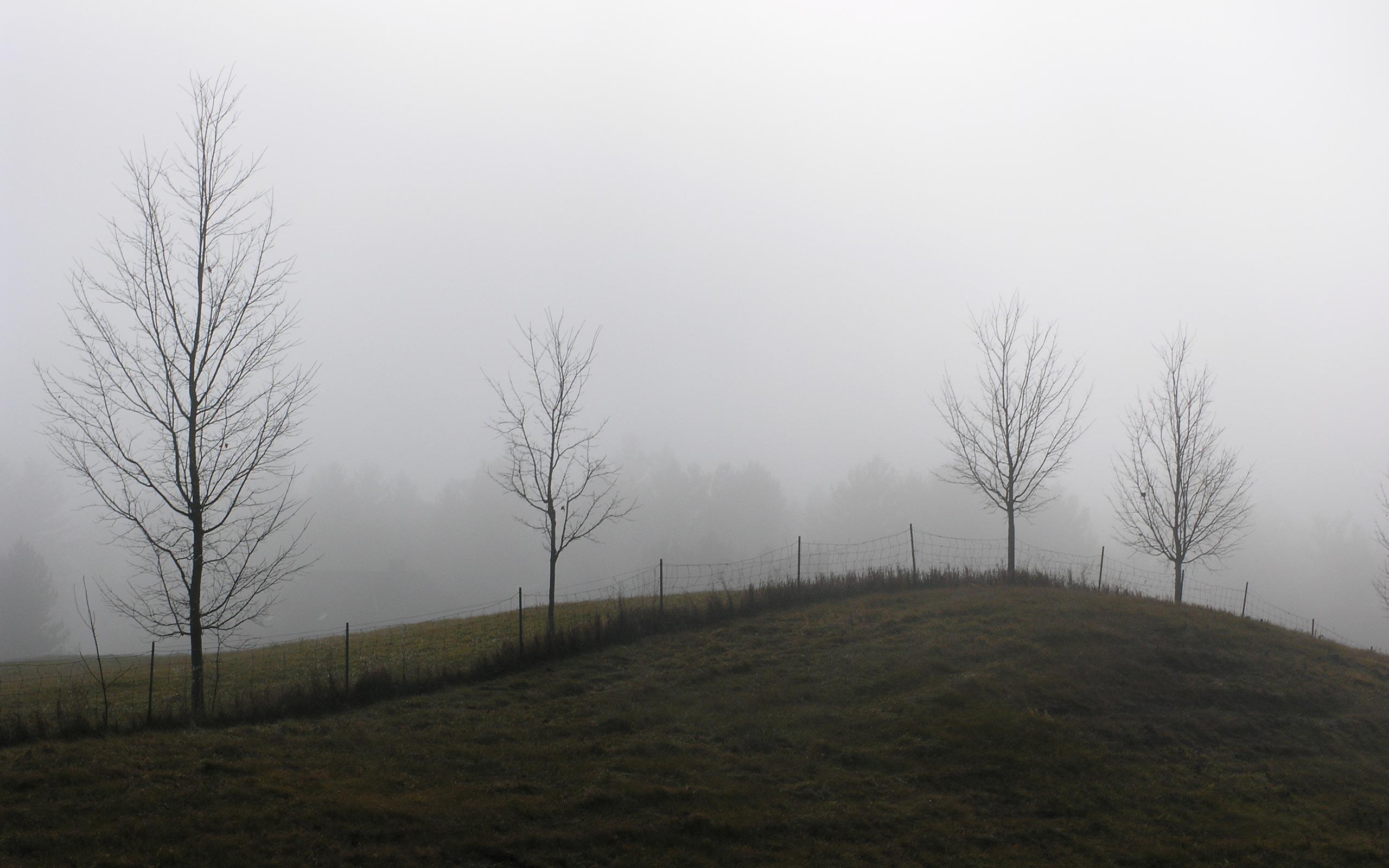 Free Winter 3d Desktop Wallpaper Meadow Wallpaper Foggy Winter Hd Desktop Wallpapers 4k Hd