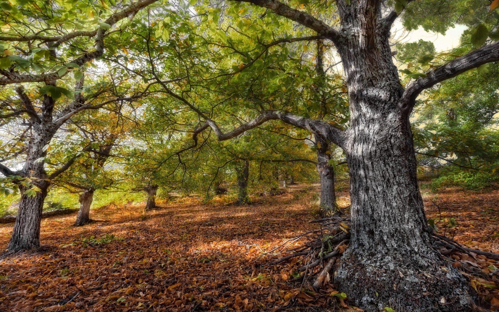 3d Forest Wallpaper Backgrounds Oak Tree Wallpaper Green Hd Desktop Wallpapers 4k Hd