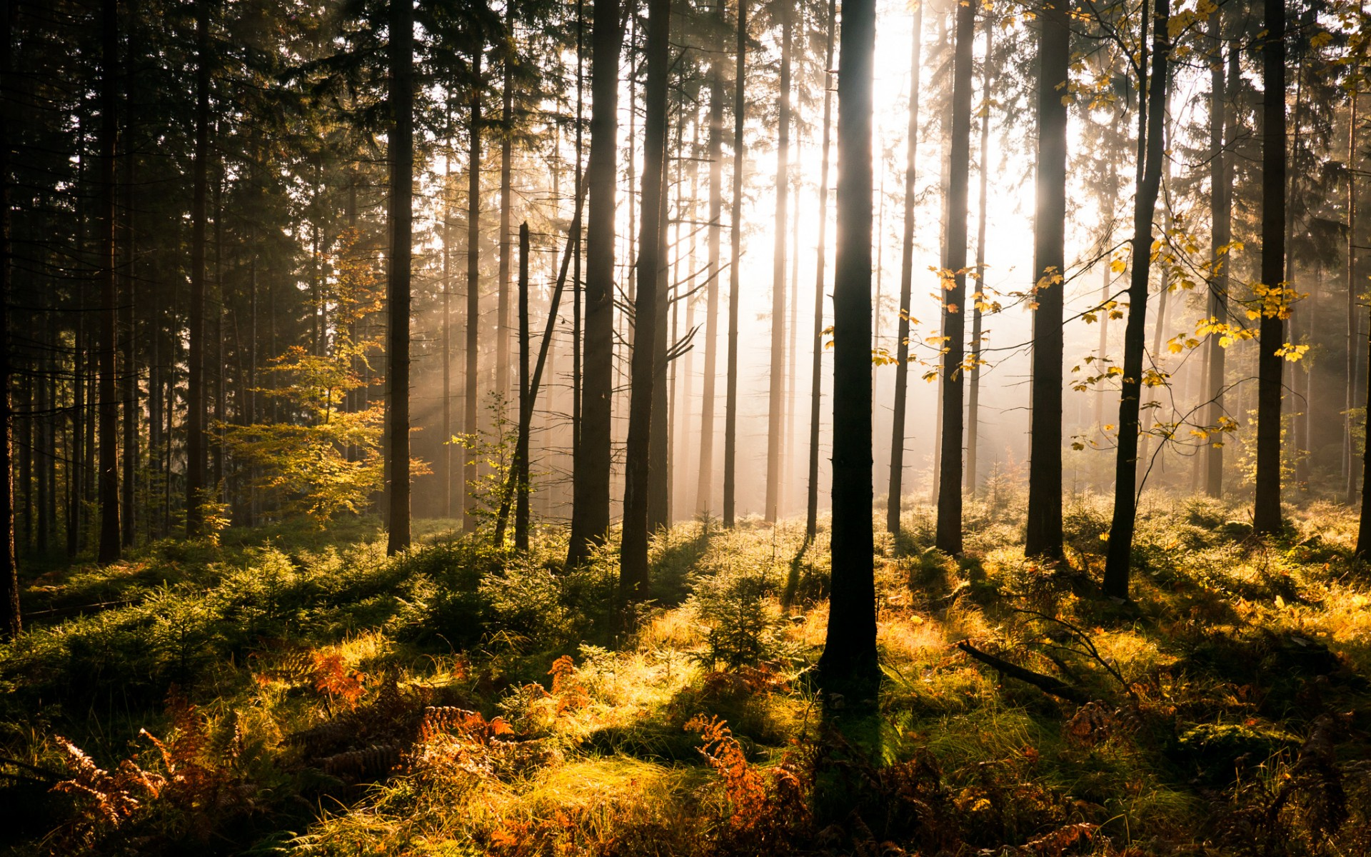 4k Fall Painting Wallpapers Pictures Of Forests Sun Hd Desktop Wallpapers 4k Hd