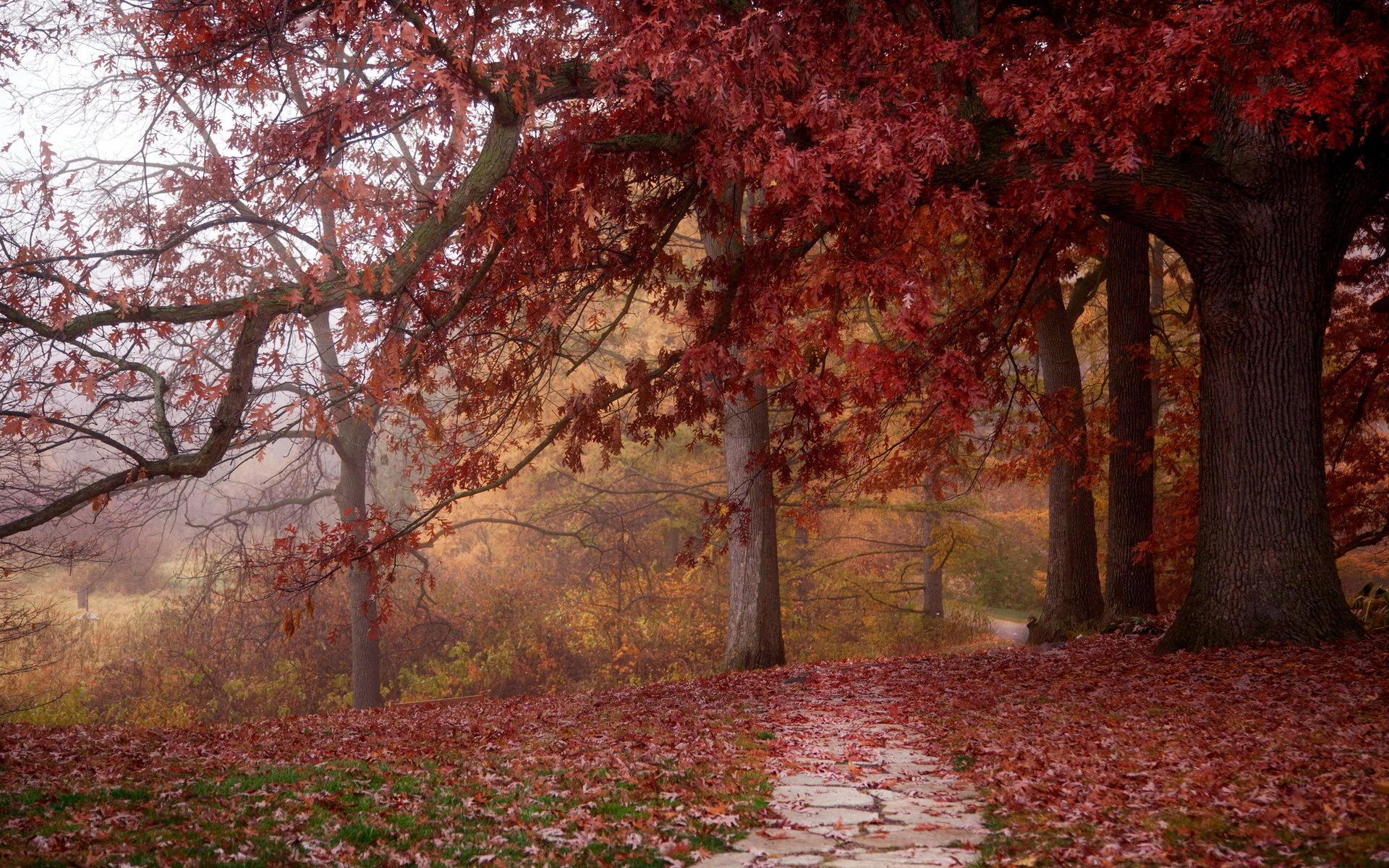 Autumn Leaves 3d Live Wallpaper Redwood Forest Wallpaper Hd Hd Desktop Wallpapers 4k Hd