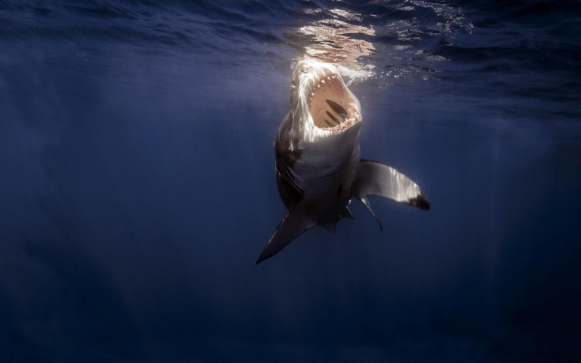 3d Shark Wallpaper Whales Wallpaper Hd Desktop Wallpapers 4k Hd