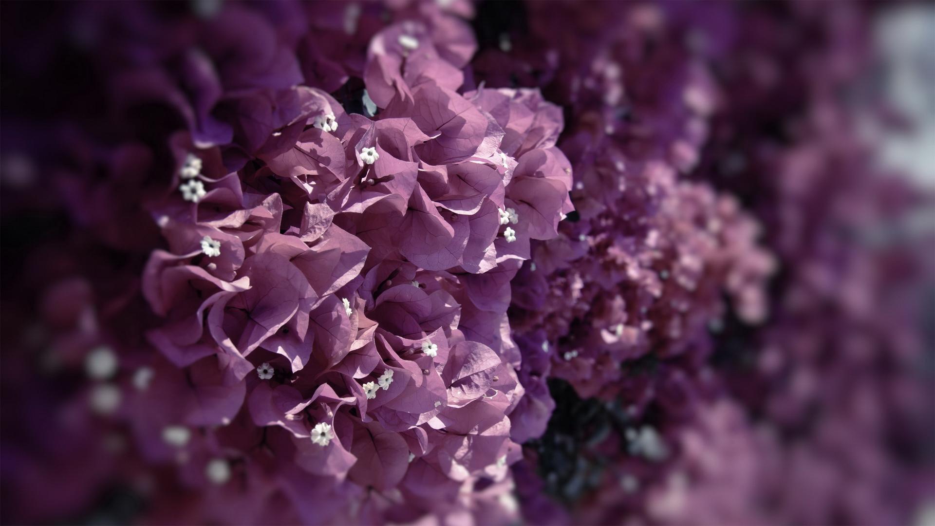 Rama 3d Name Wallpapers Beautiful Flower Dandelion Hd Desktop Wallpapers 4k Hd