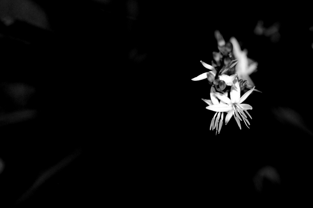 Wallpaper Cars Black And White Flowers A4 Hd Desktop Wallpapers 4k Hd