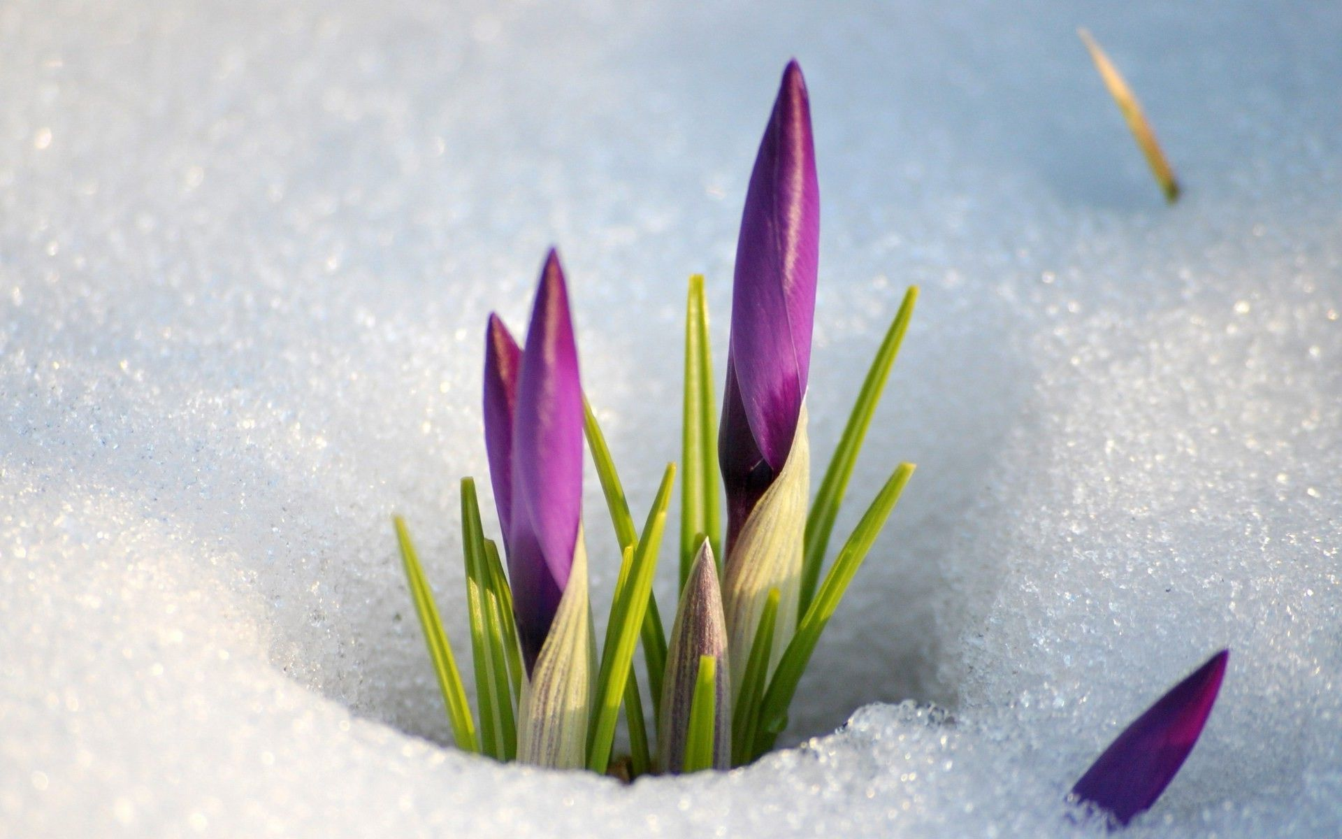 Beautiful Space 3d Live Wallpaper And Screensaver Crocuses Background Download Hd Desktop Wallpapers 4k Hd
