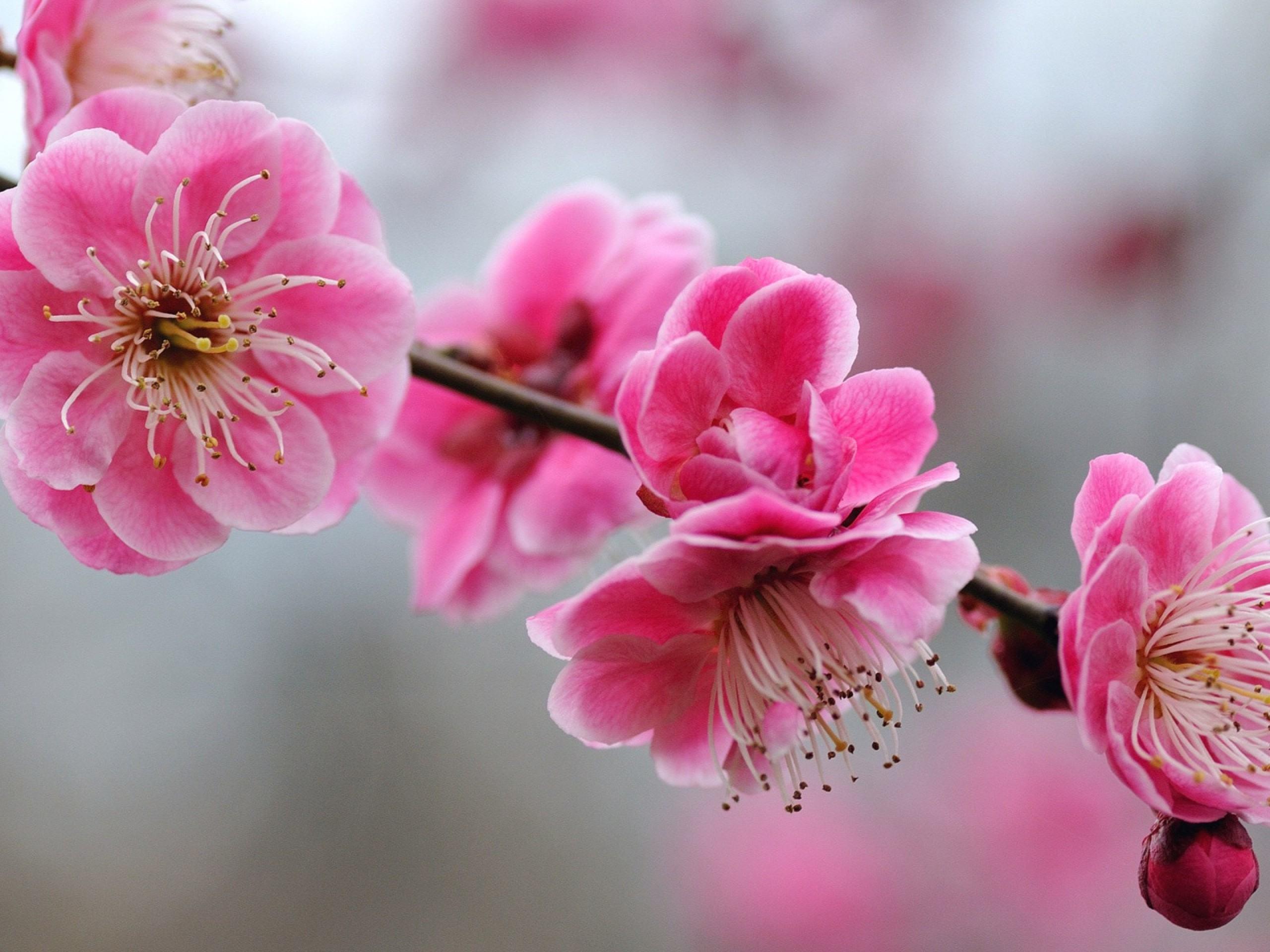 3d Blossoms Live Wallpaper Cute Girly Wallpapers A2 Hd Desktop Wallpapers 4k Hd