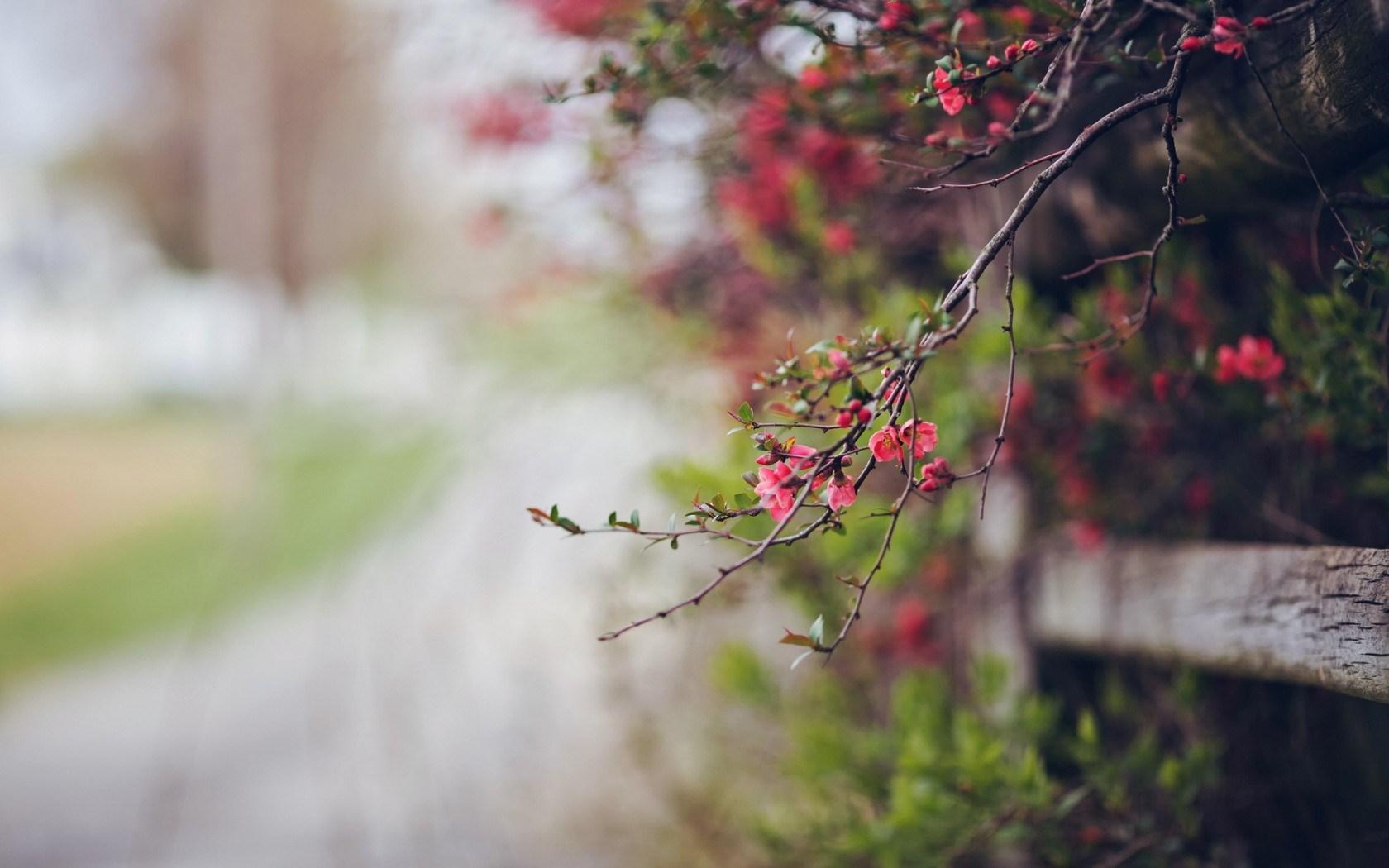 Raindrops 3d Live Wallpaper Flowers Macro Nature Hd Desktop Wallpapers 4k Hd