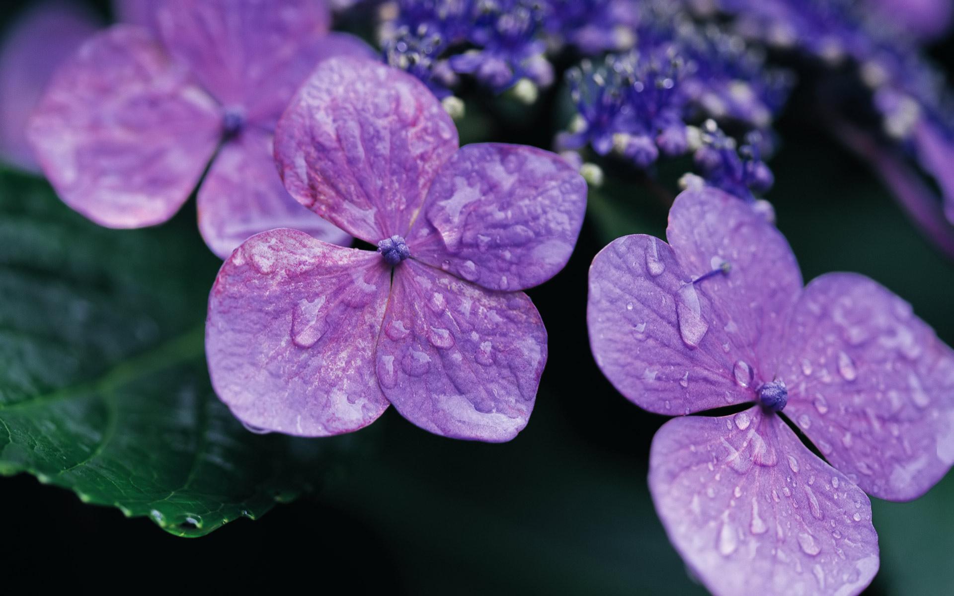 Kristen Stewart Cute Wallpapers Lilac Backgrounds Hd Desktop Wallpapers 4k Hd