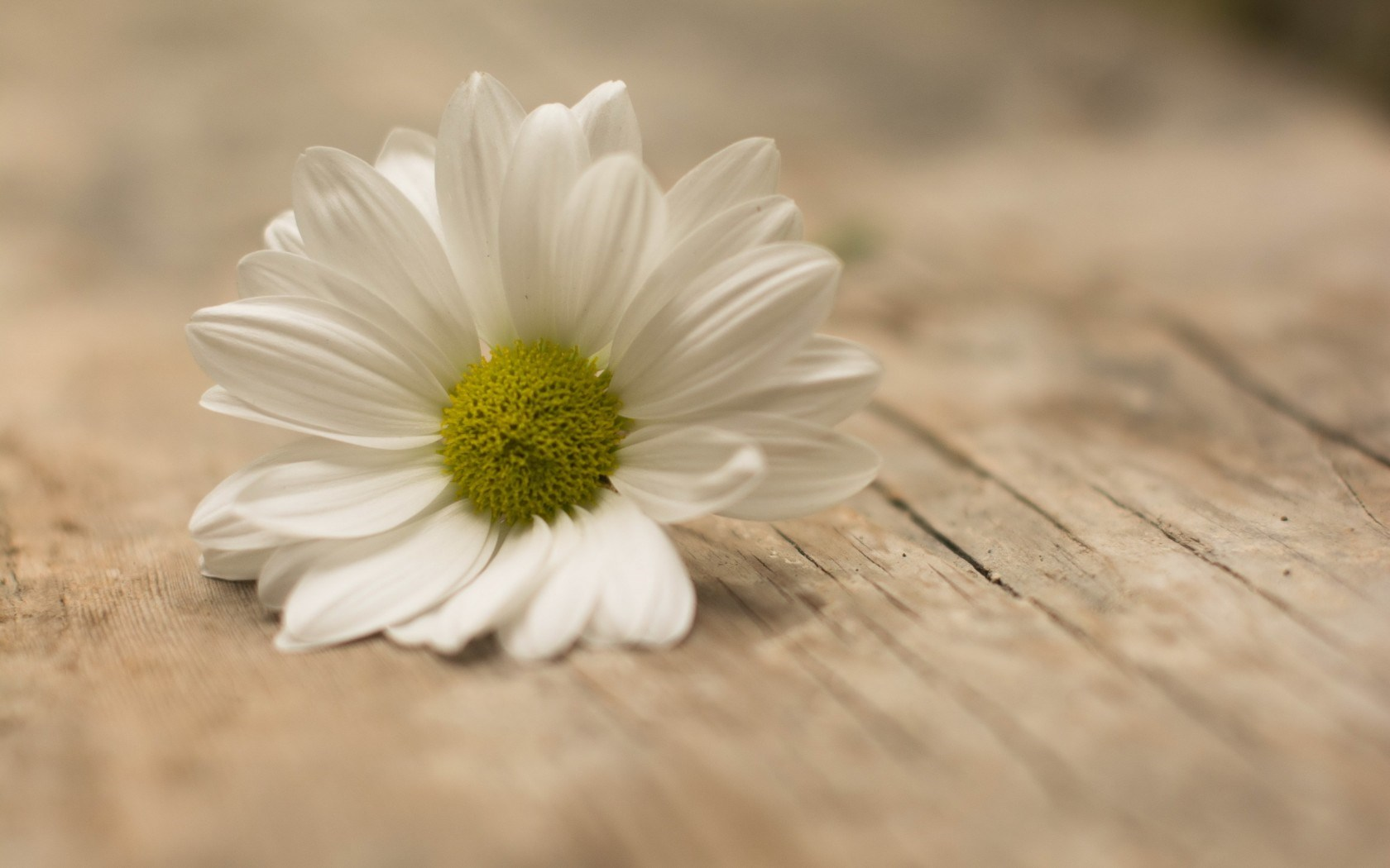 3d Live Wallpapers Download For Iphone Picture Of Daisies Hd Desktop Wallpapers 4k Hd