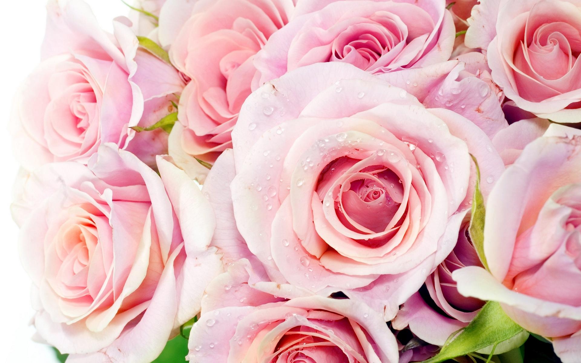 Barbie 3d Live Wallpaper Pink Roses Wallpaper Desktop Hd Desktop Wallpapers 4k Hd