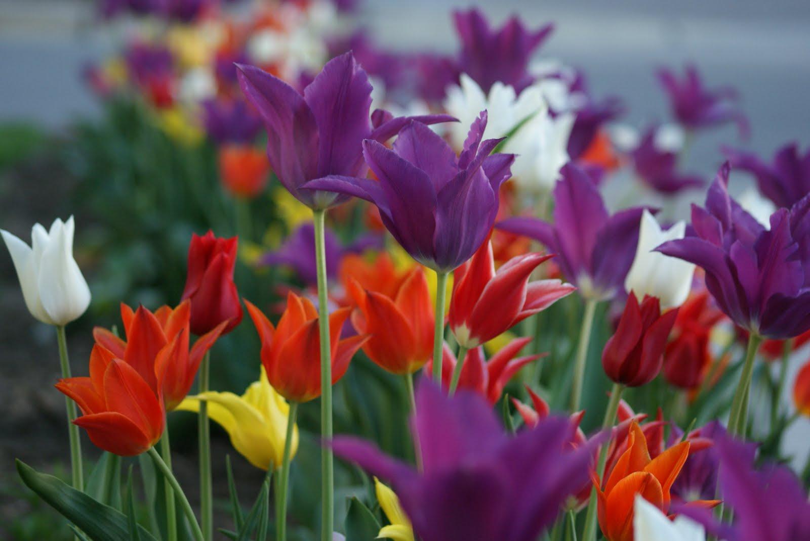 Peace Hd Wallpapers Free Download Vivid Flowers Wallpaper Hd Desktop Wallpapers 4k Hd