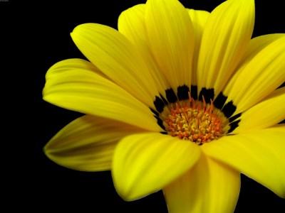 yellow flower wallpaper A8 - HD Desktop Wallpapers | 4k HD
