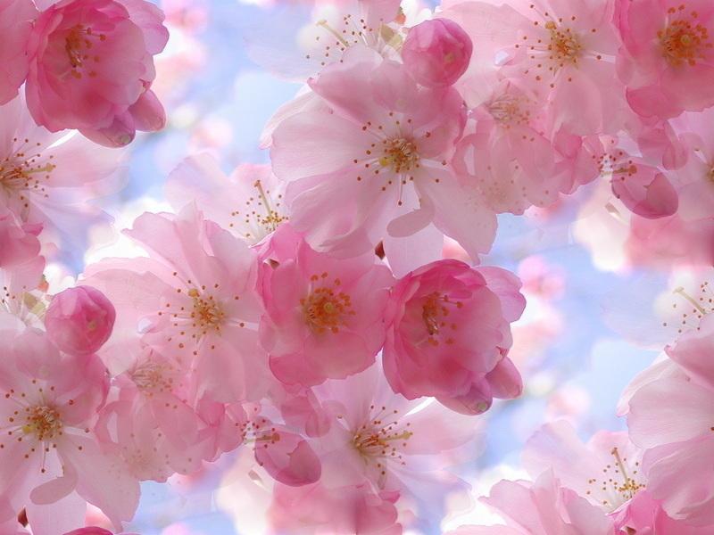 Www 3d Flower Wallpaper Com Pink Flowers Background 12 Free Wallpaper