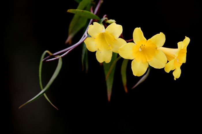 Www 3d Flower Wallpaper Com 10 Types Of Yellow Flowers Desktop Backgrounds