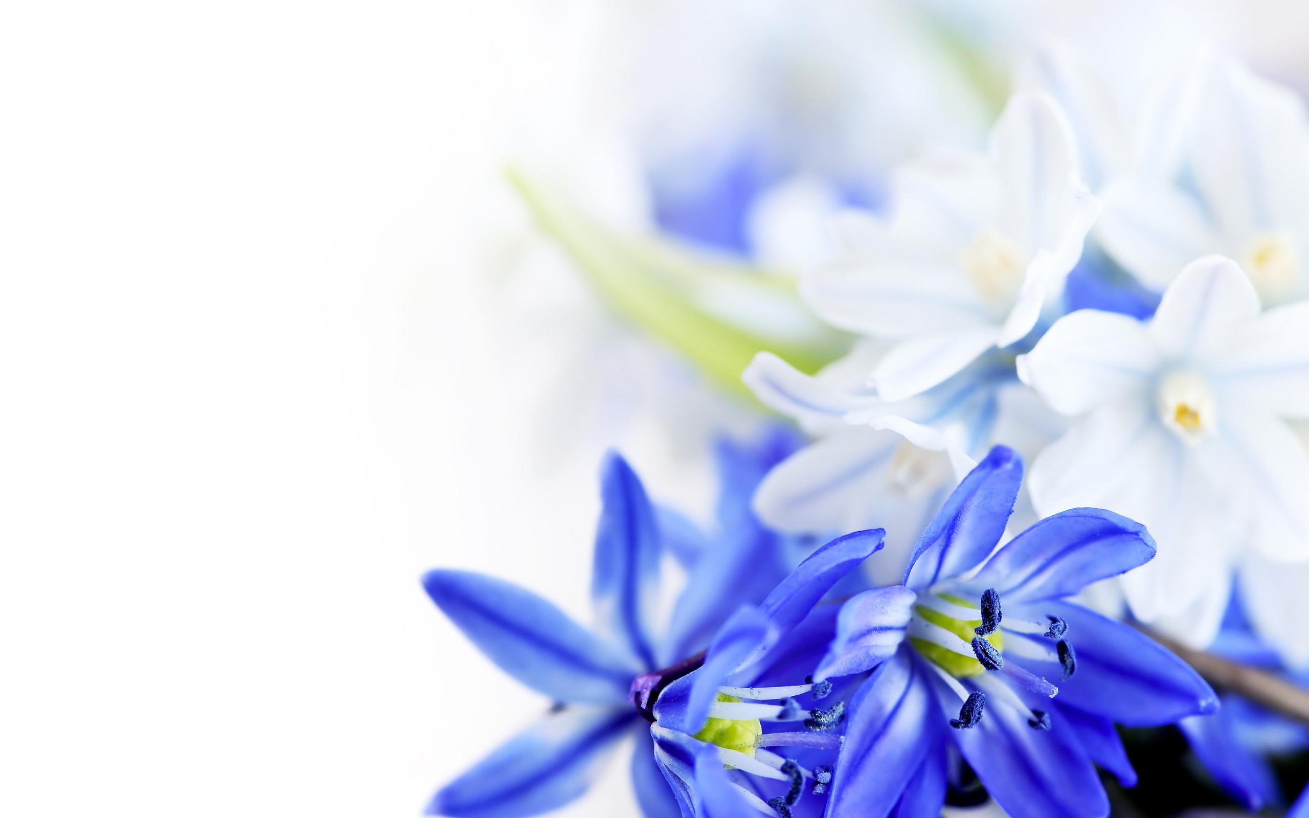 Www 3d Flower Wallpaper Com White Floral Wallpaper 10 Cool Hd Wallpaper