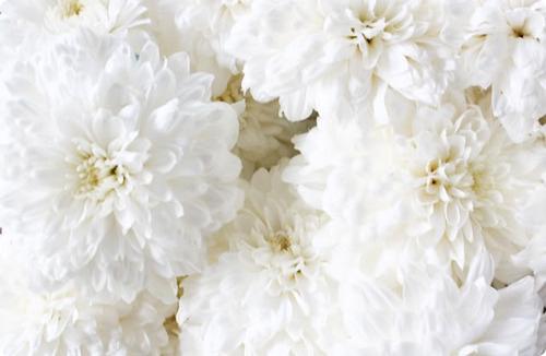 Www 3d Flower Wallpaper Com White Flowers Tumblr 13 Background Wallpaper