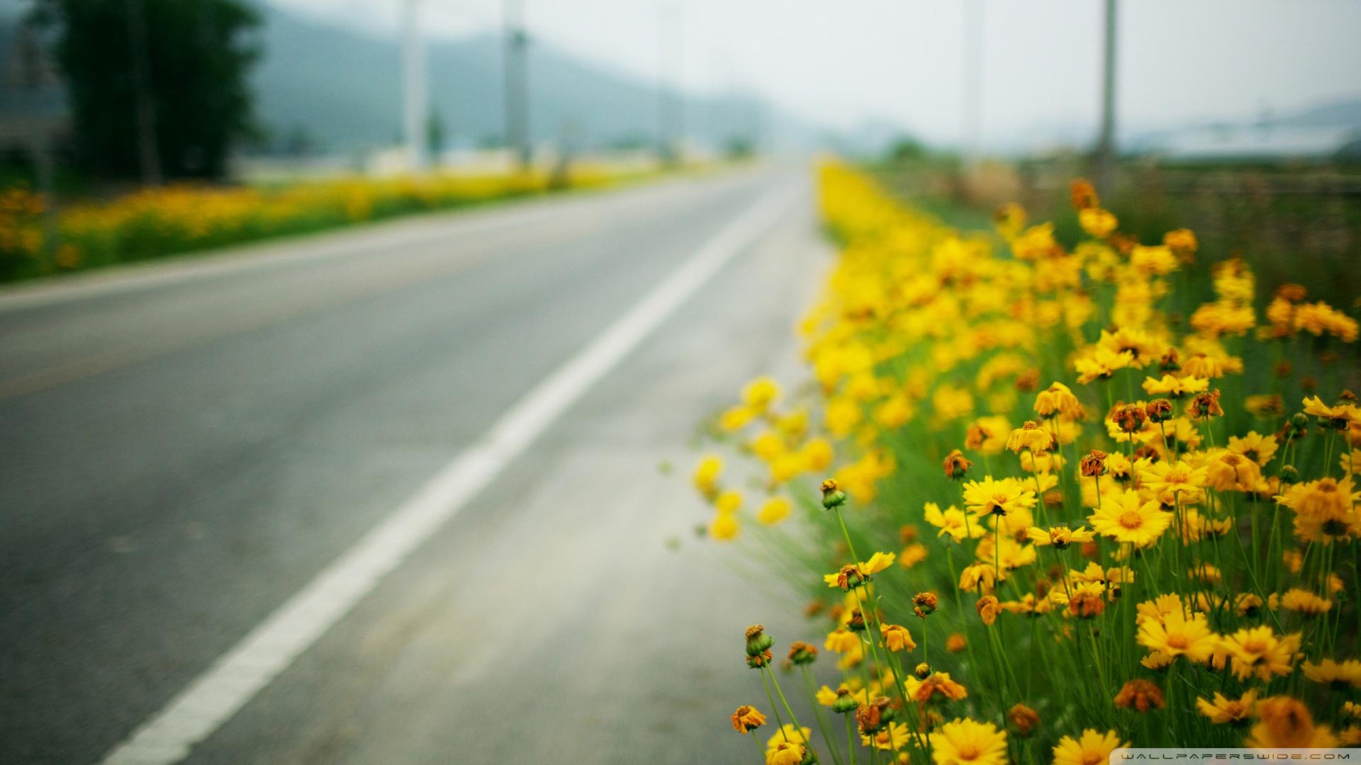 Www 3d Flower Wallpaper Com Yellow Flowers Roadside 13 Desktop Background