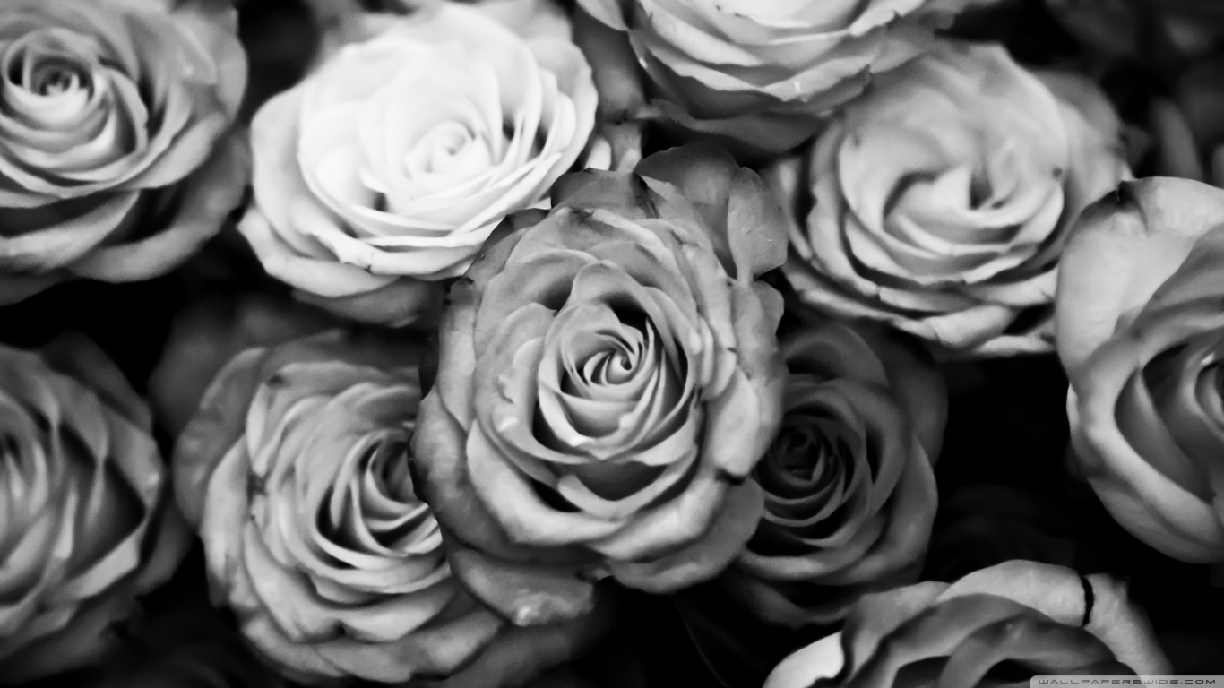 Www 3d Flower Wallpaper Com Black And White Rose Wallpaper 17 Cool Hd Wallpaper
