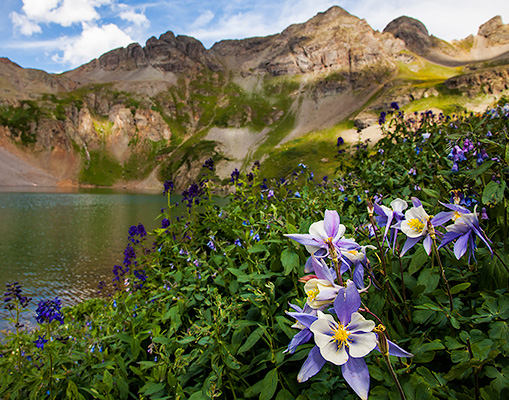 Www 3d Flower Wallpaper Com Wildflowers Of The Rocky Mountains 9 Desktop Wallpaper